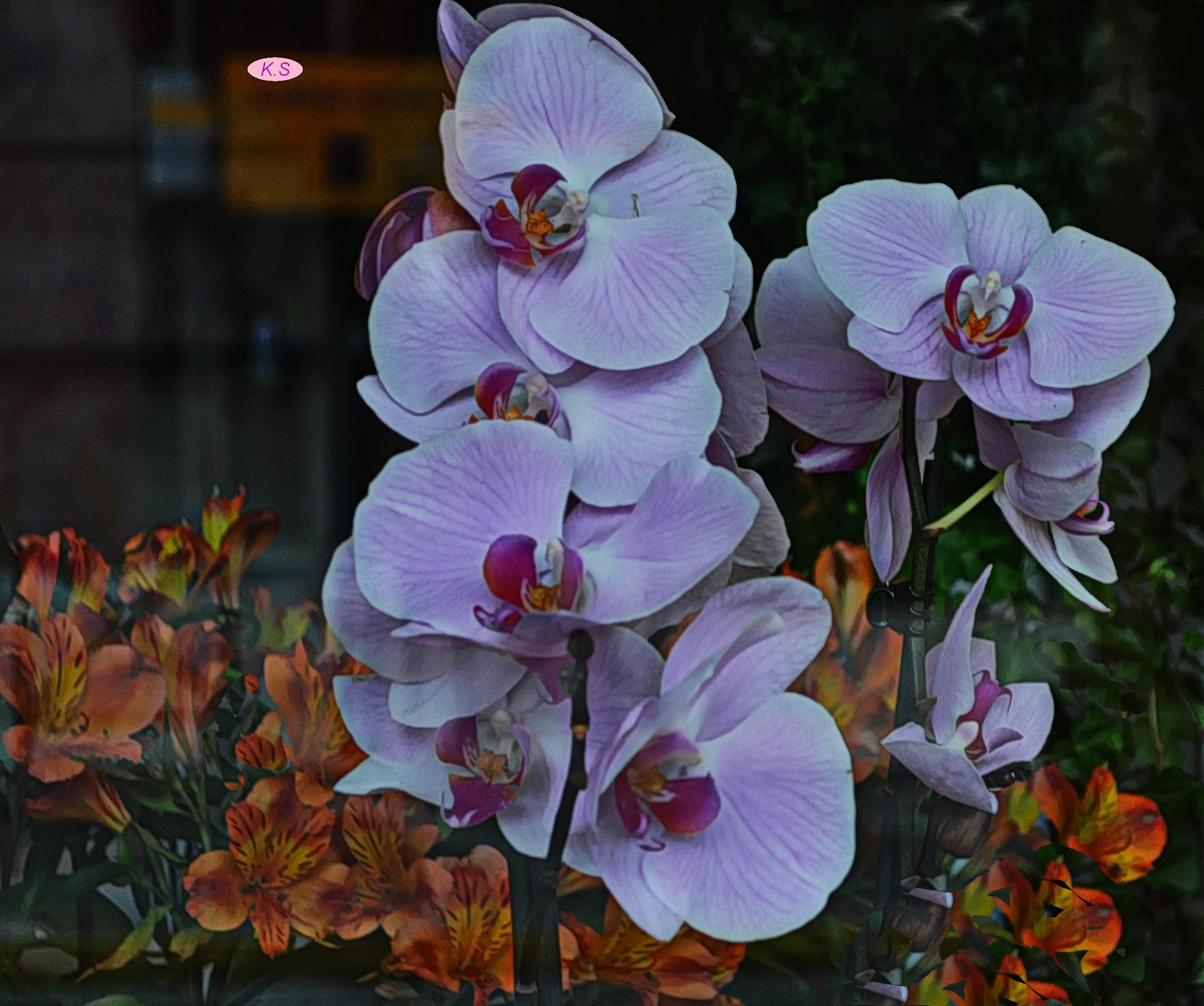 Photo in Macro #orchid #athens #greece
