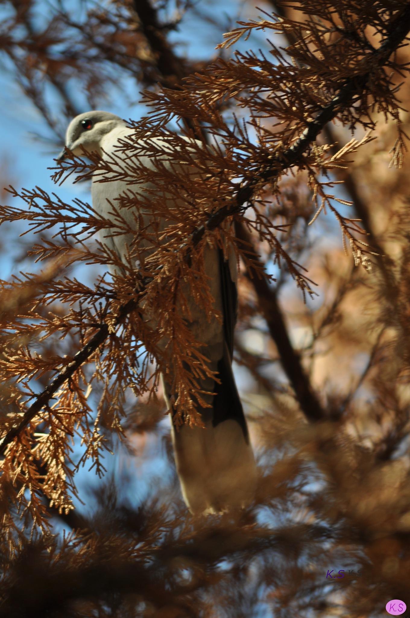 bird on a branch by Katherine.Soulis
