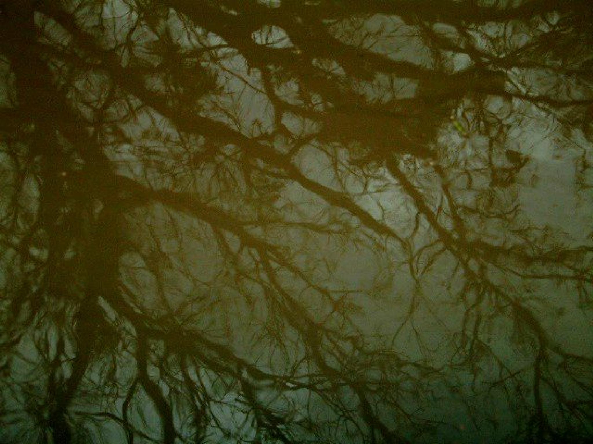 reflection of trees on a roadside pool of water  by annapoorna.sitaram