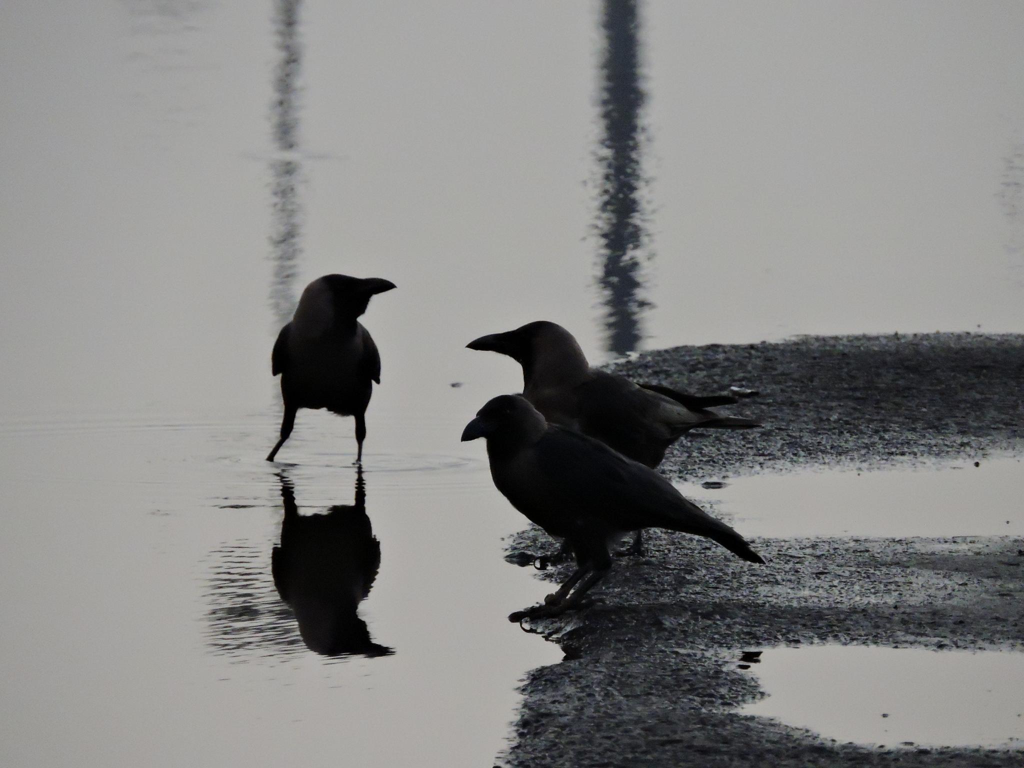 conversation by annapoorna.sitaram