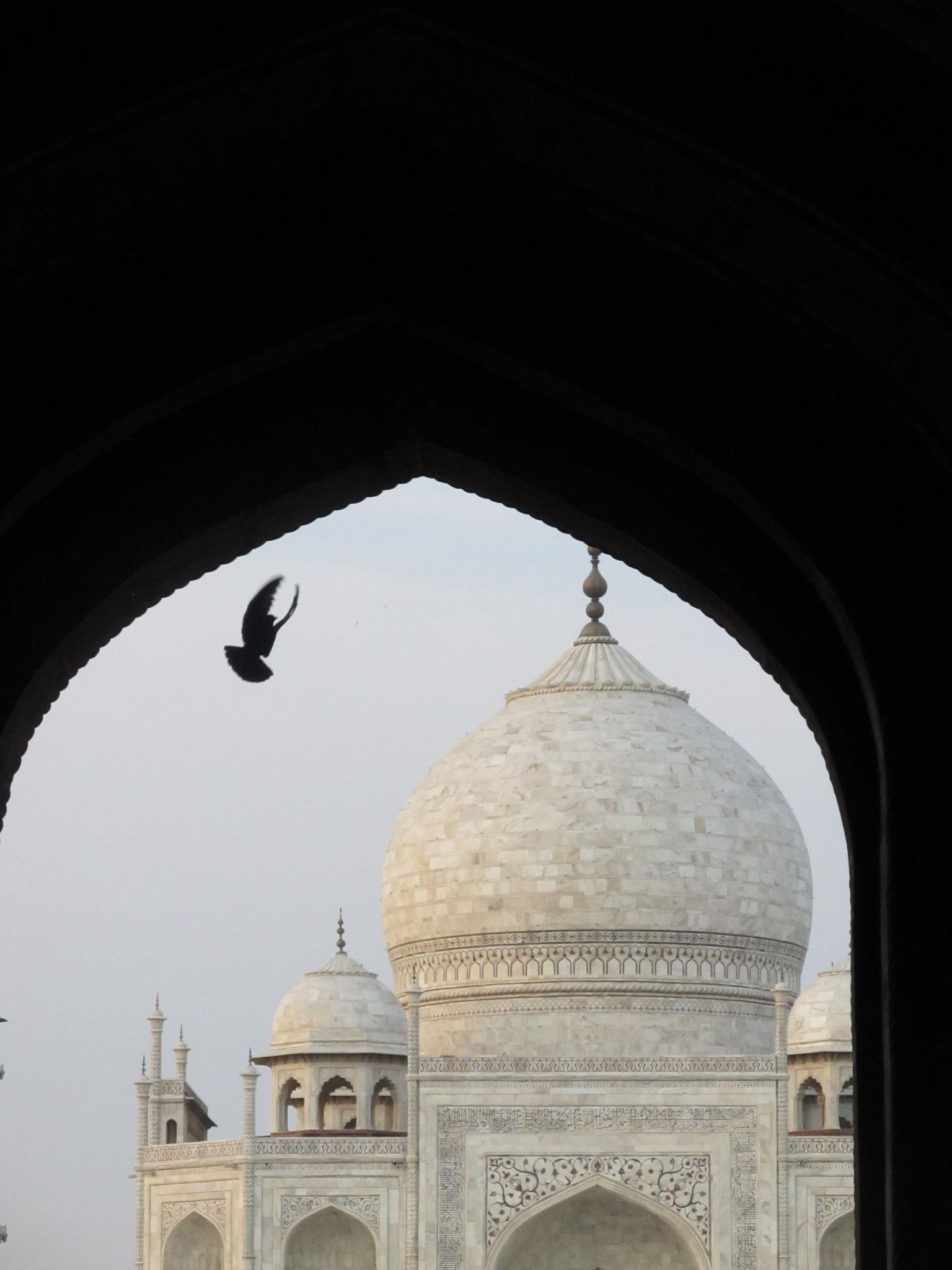 The Taj Mahal, India by annapoorna.sitaram