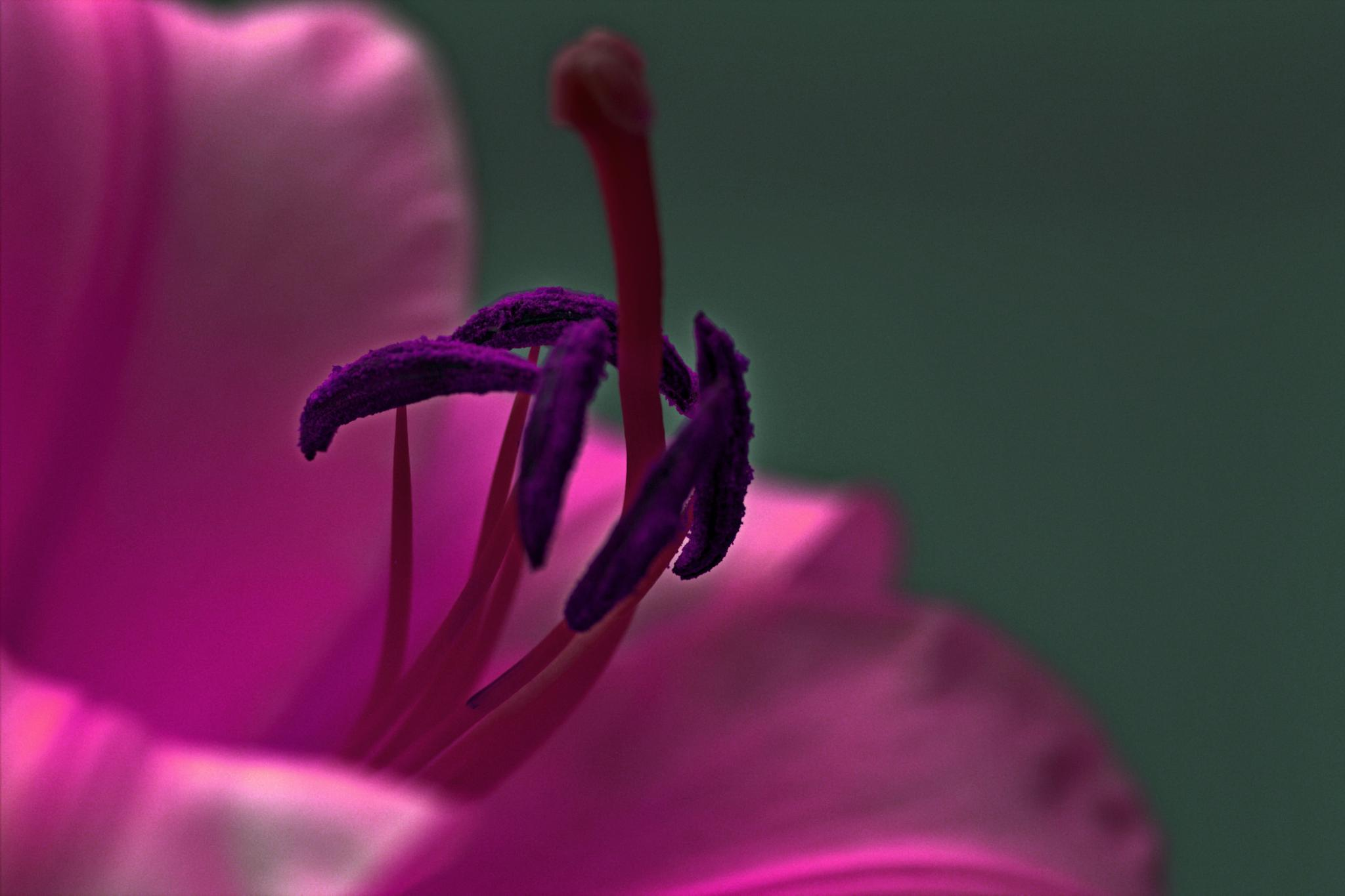Stamen by Gary Phillips