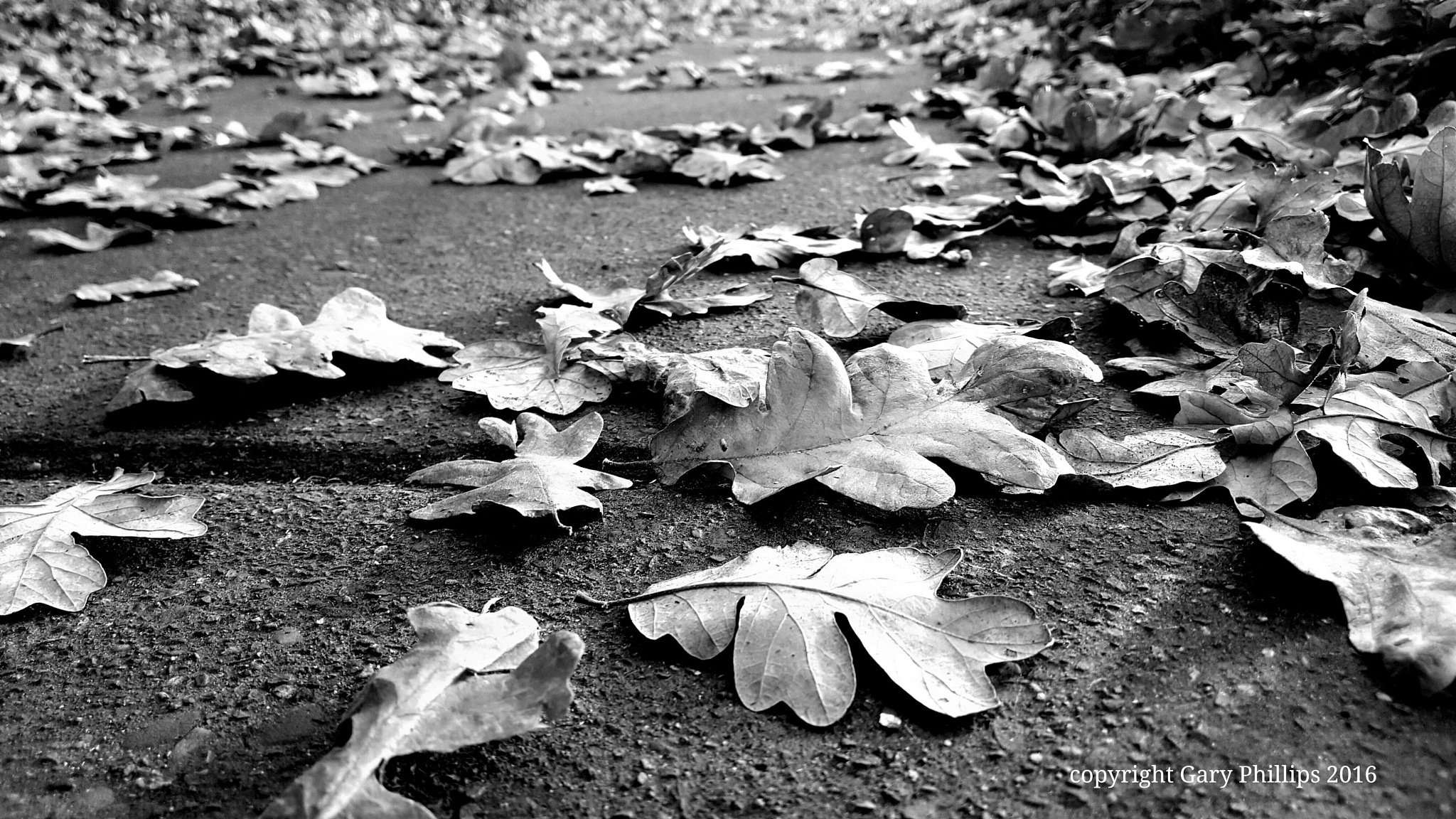 Fall in Black and White by Gary Phillips