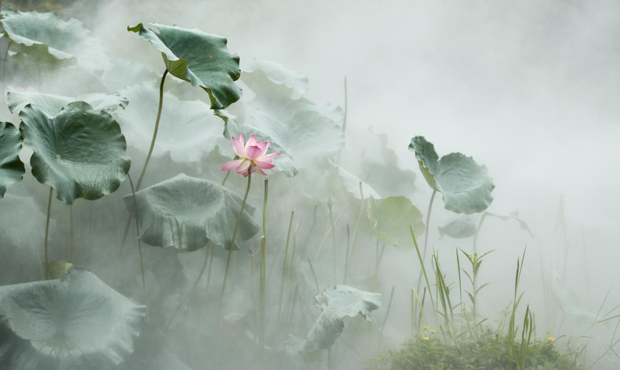 lotus in the mist 01 by PatrickLeeKKAh9