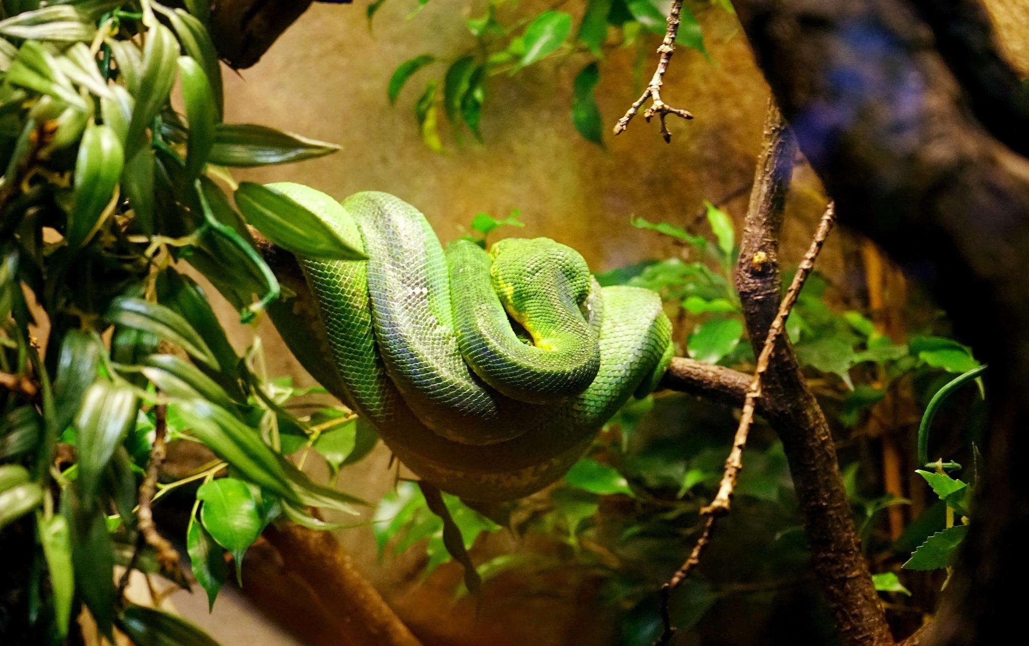 Snake! by sam.ashtari.7