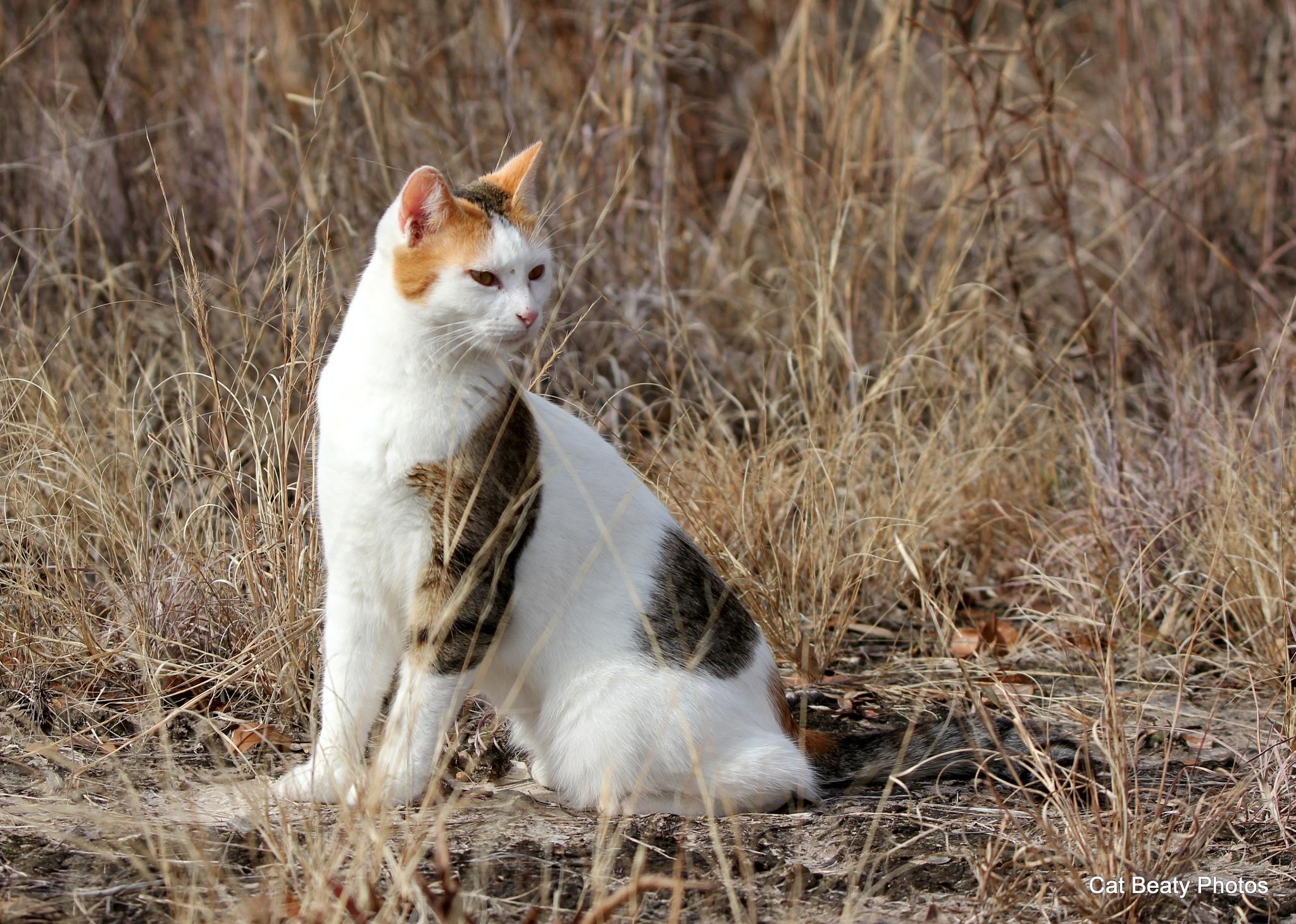 Watchful Eye by cat.beaty