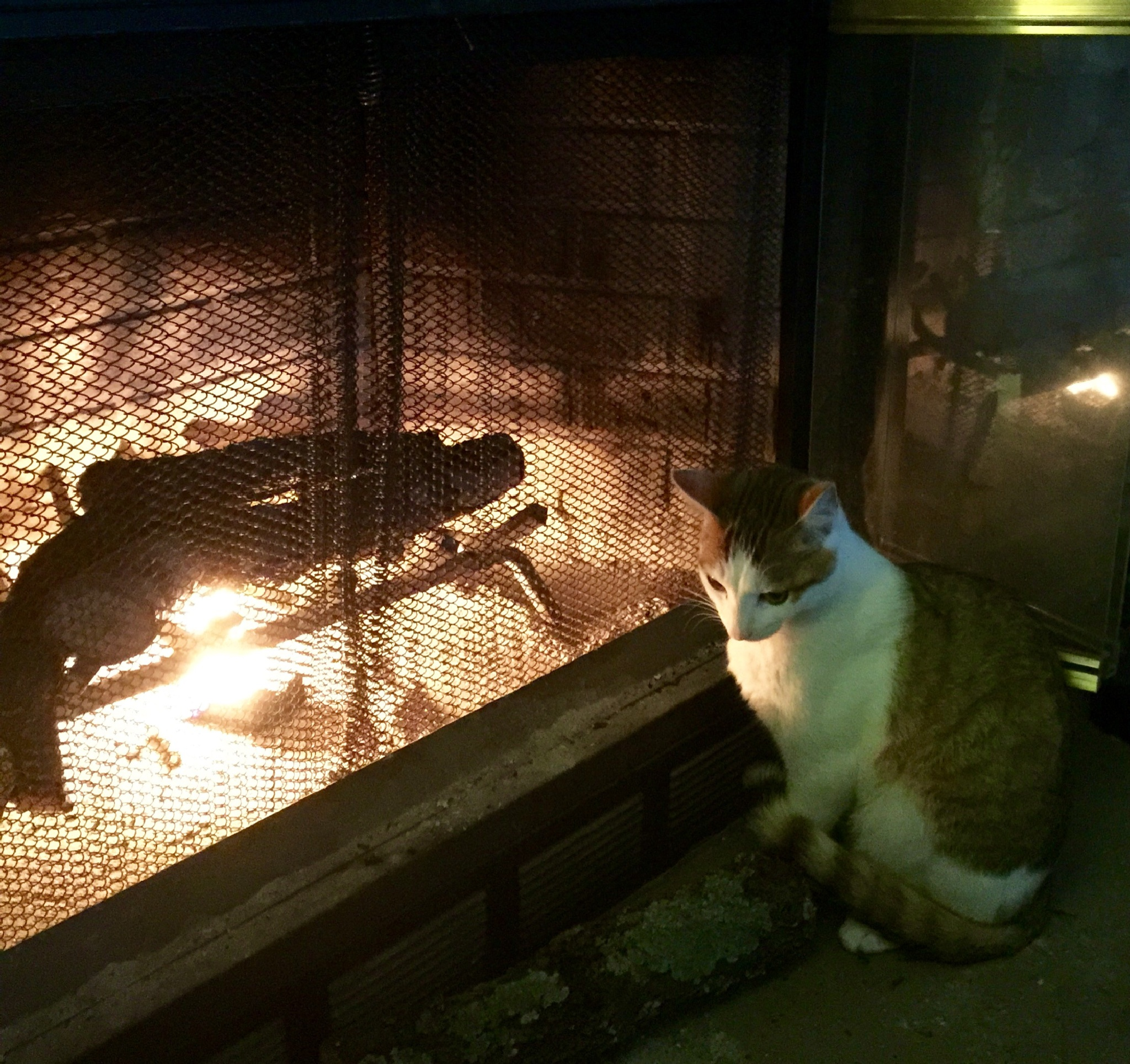 Warm by the Fire by cat.beaty