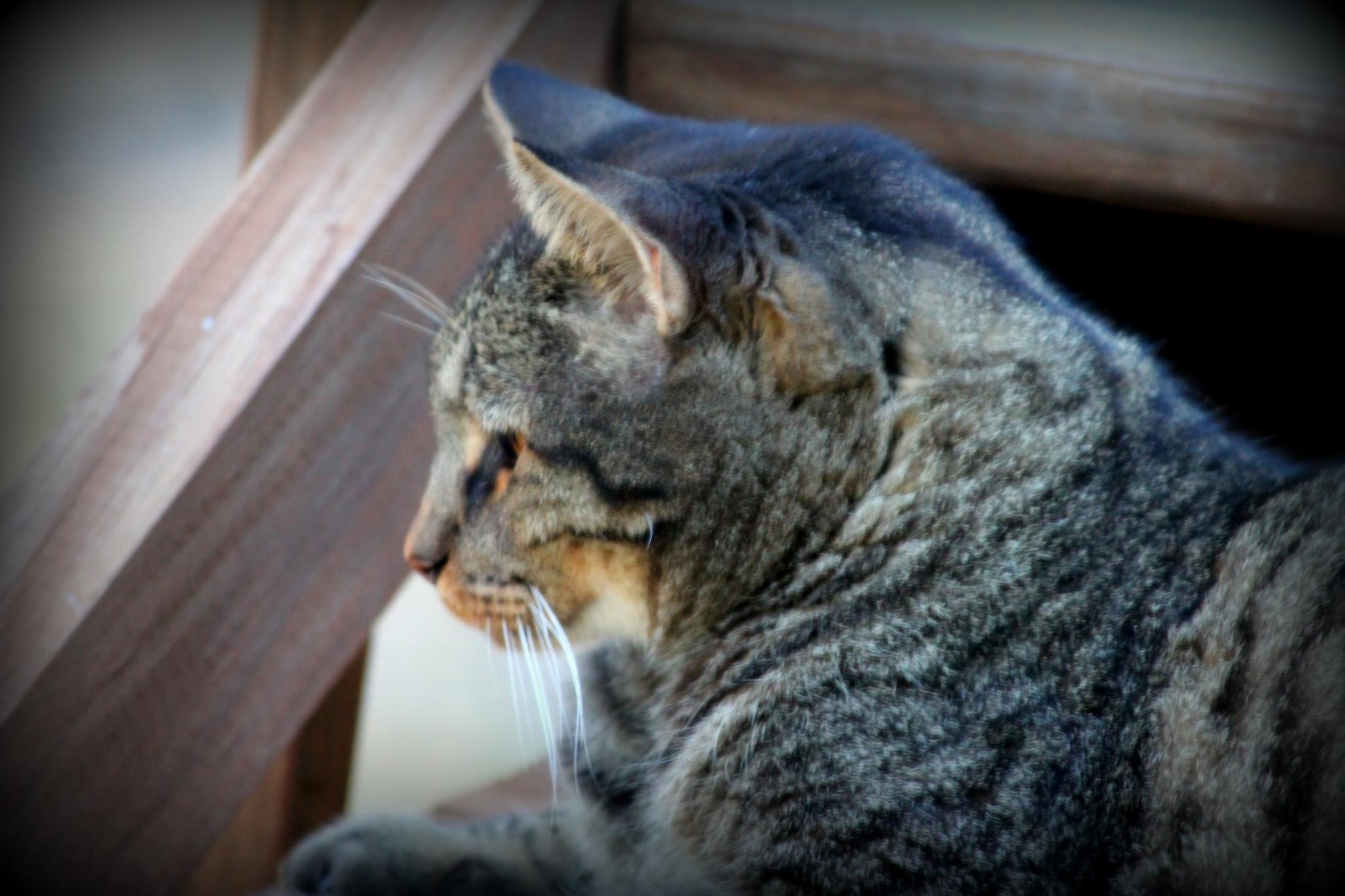 My Baby by cat.beaty