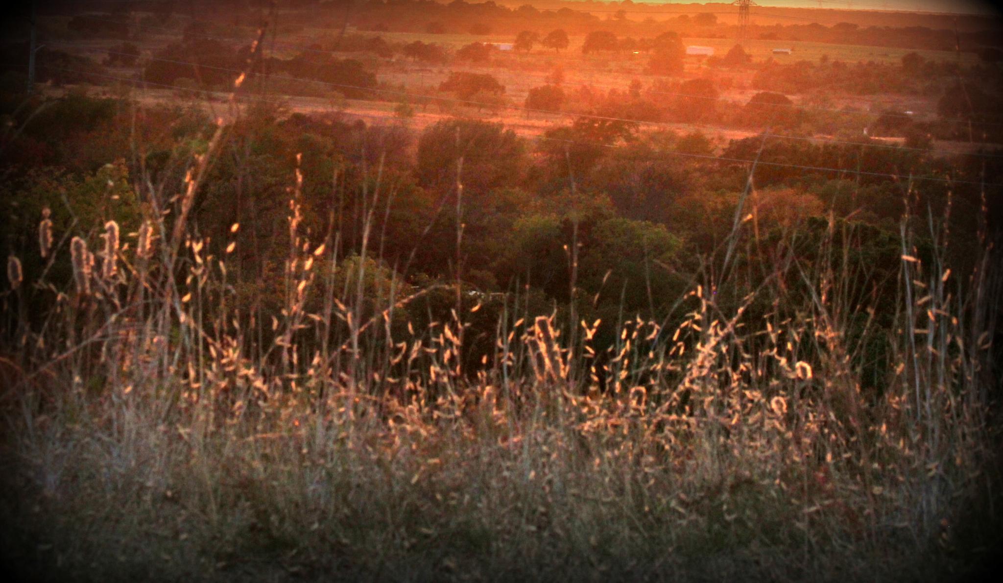 Golden Valley by cat.beaty