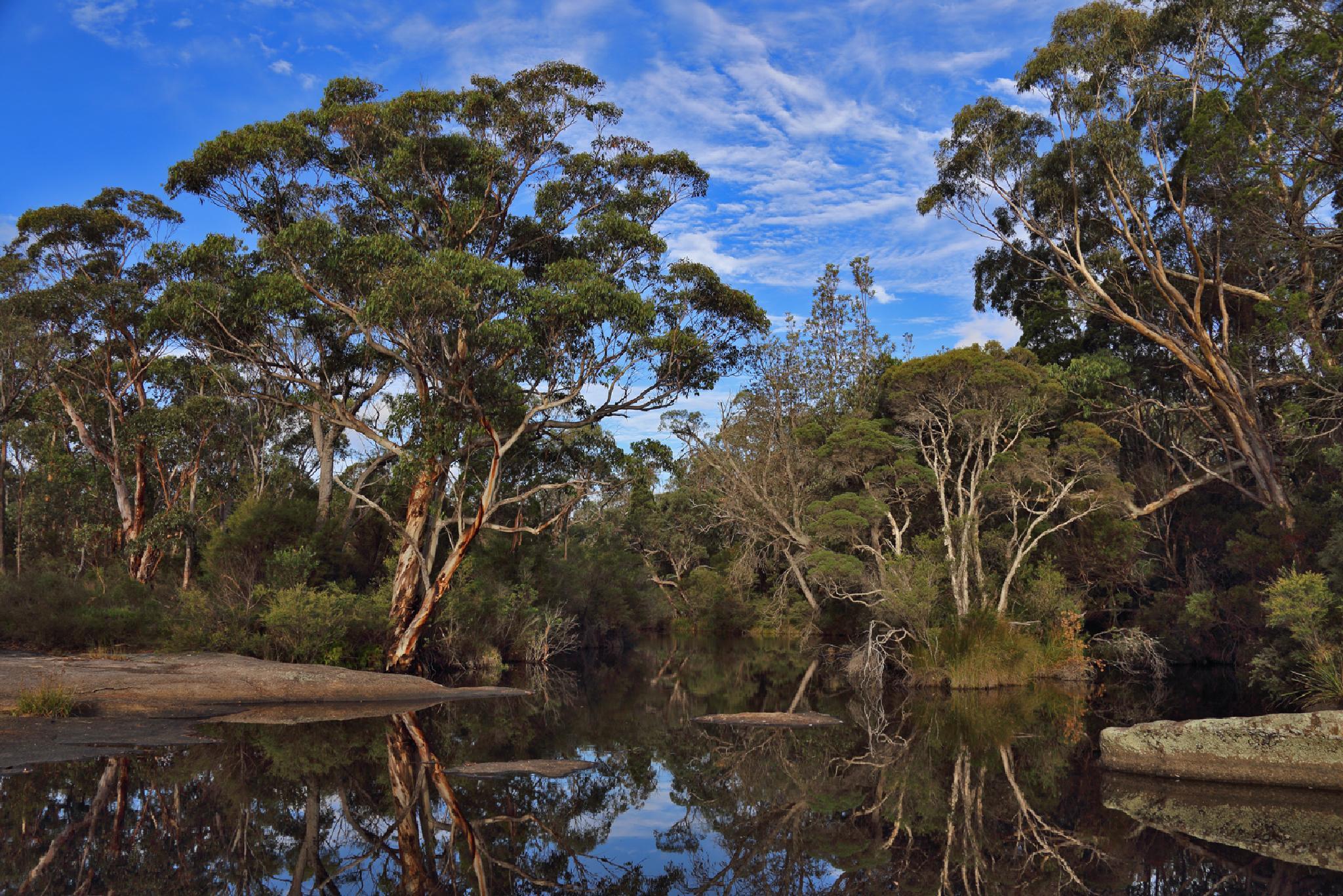 Reflections at Bald Rock Creek by Chris Ryan