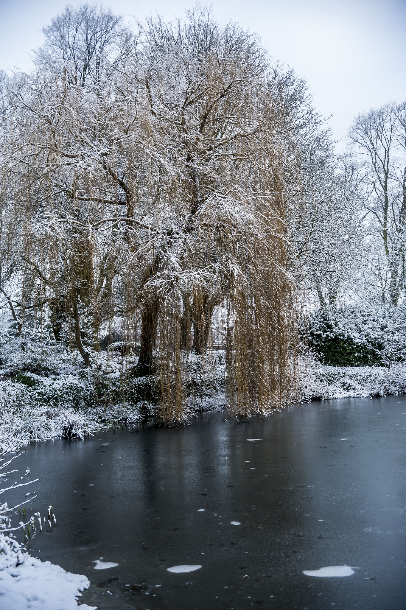 Chilly Willow by Pete Feeny
