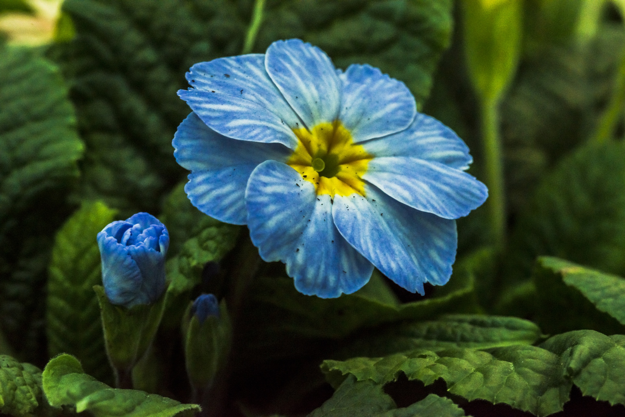 Blue Flower 2 by Pete Feeny