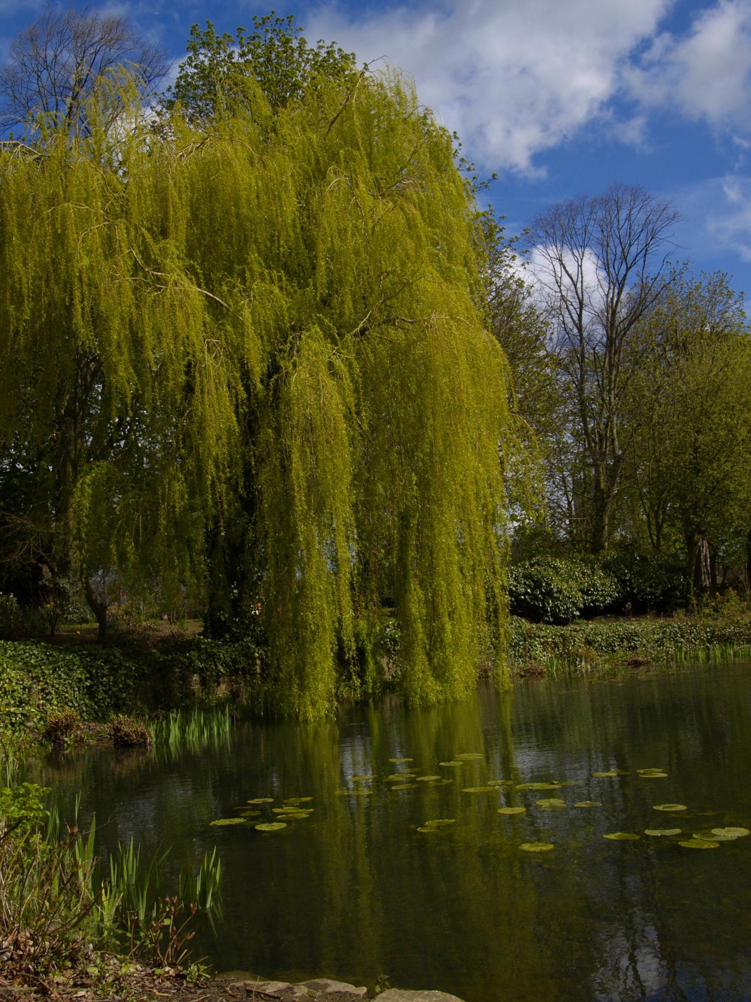 Parks Pond by Pete Feeny