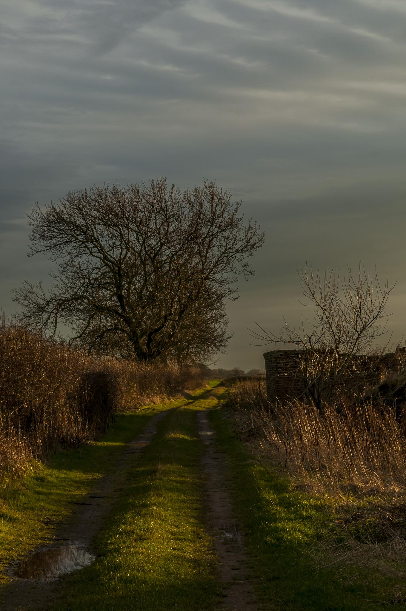 Evening Track by Pete Feeny