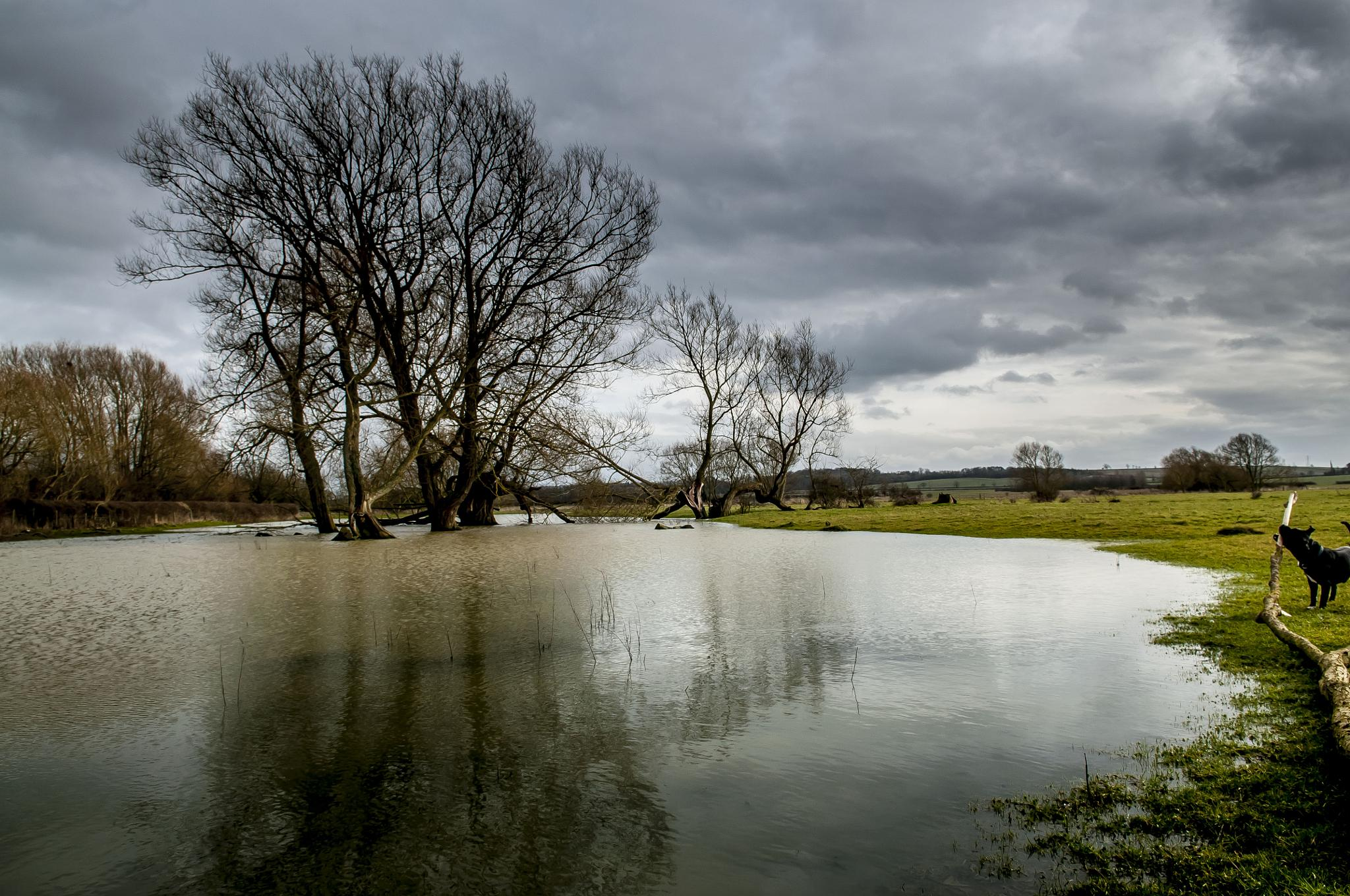 Rainy Skys and Puddles by Pete Feeny