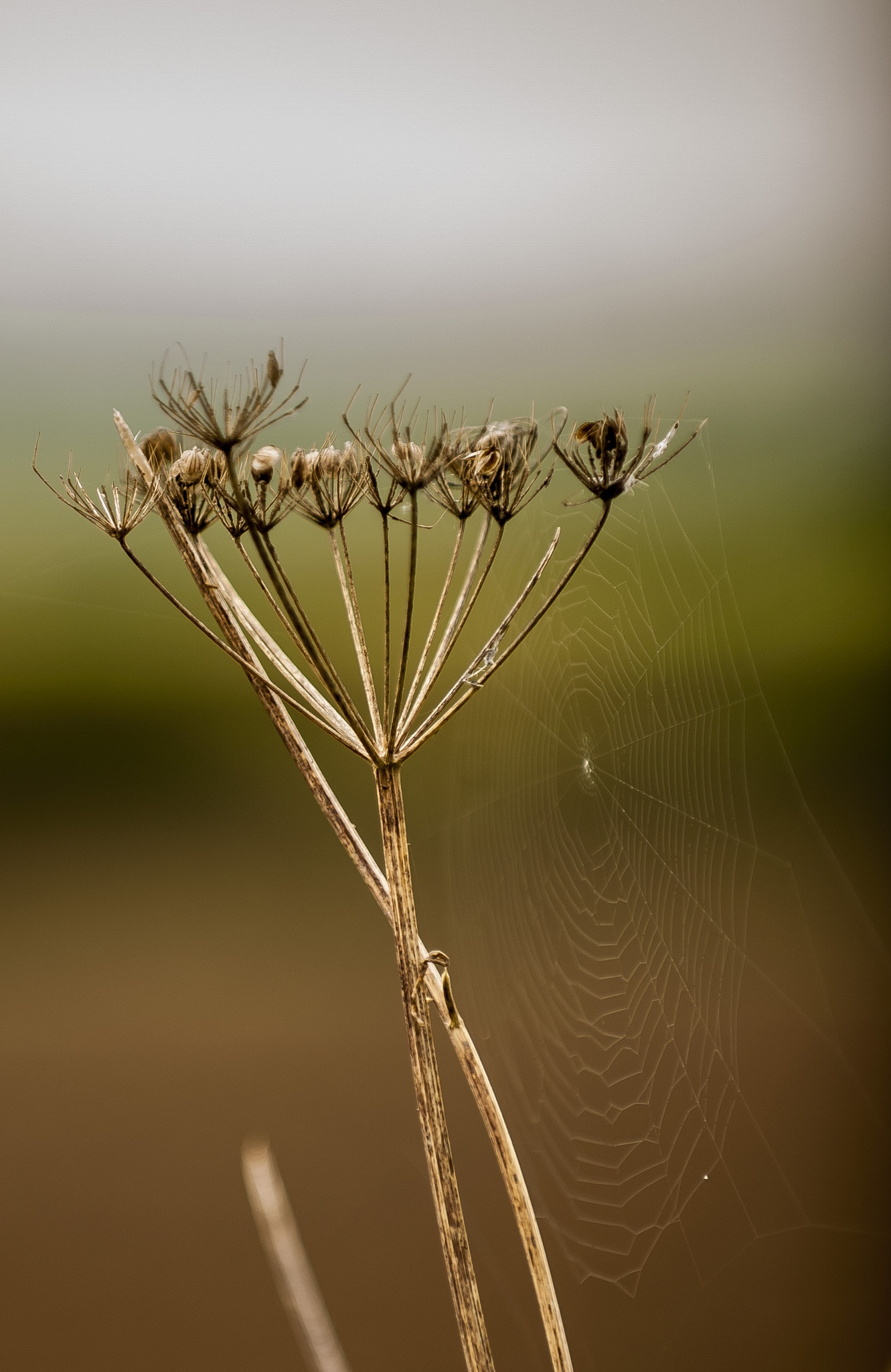 Autumn Webs by Pete Feeny