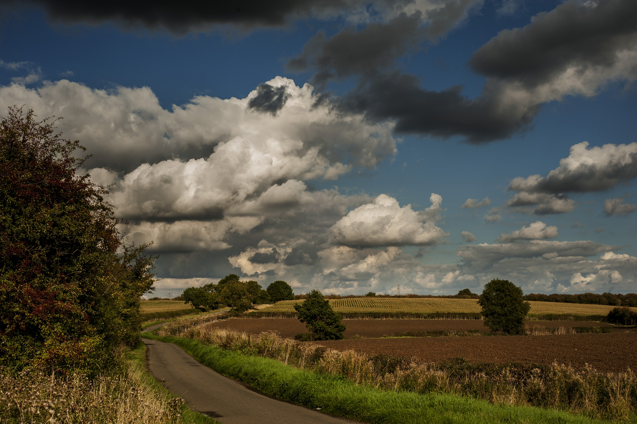 Country Road by Pete Feeny