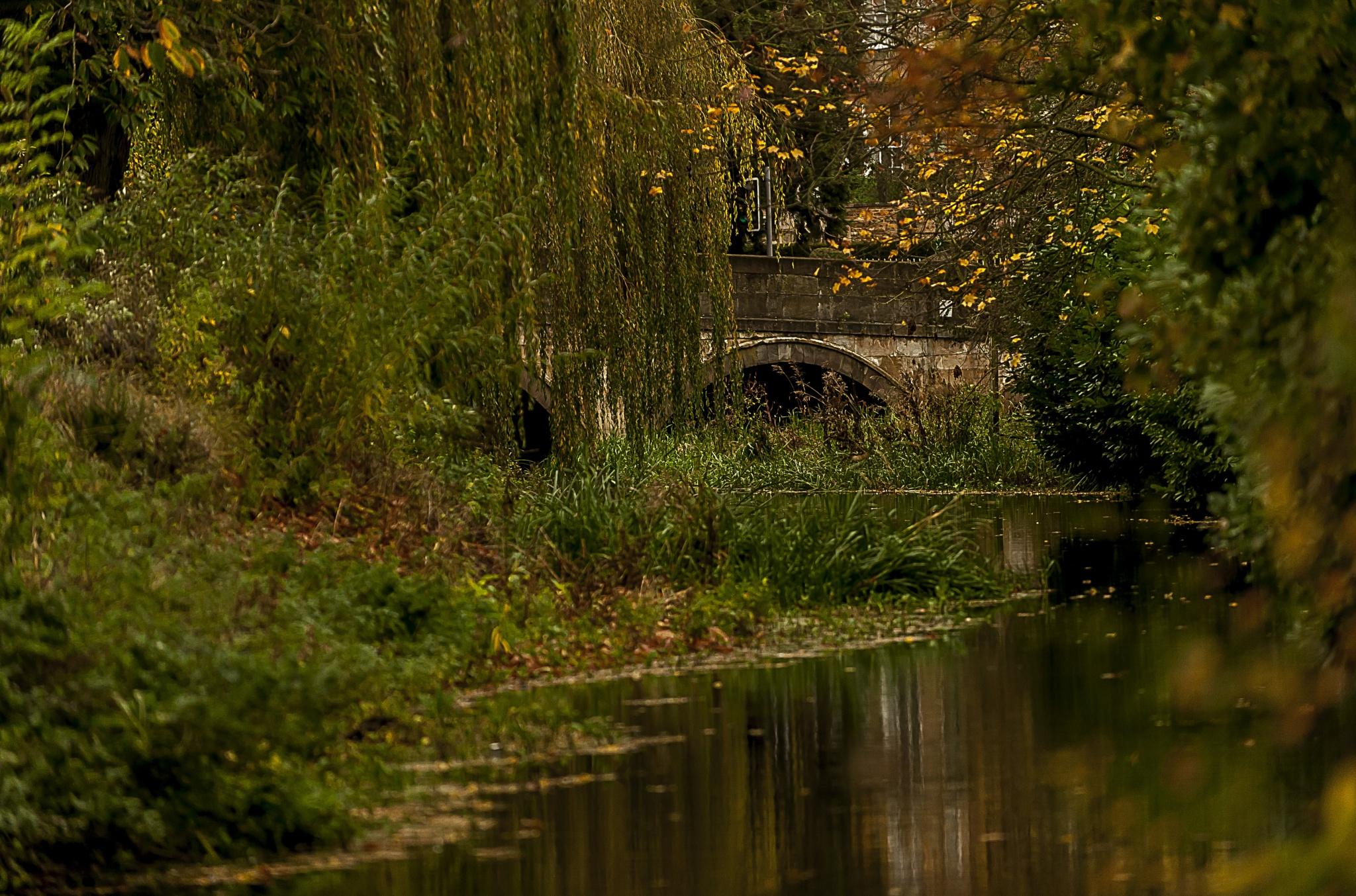 Artumn River by Pete Feeny