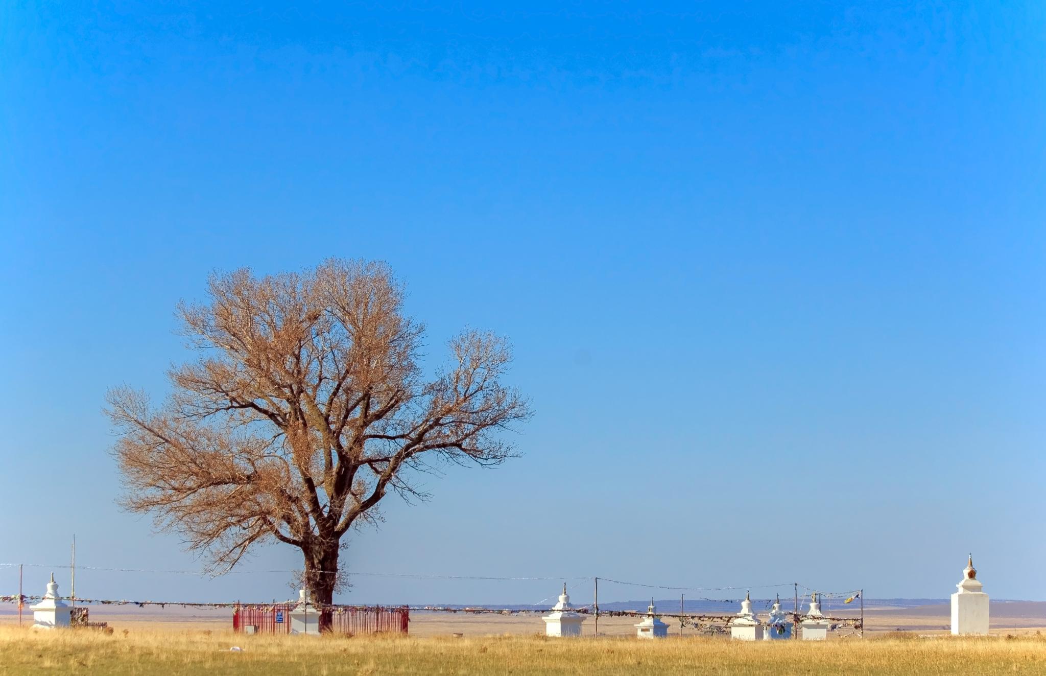 Lone poplar Одинокий тополь by myriil123