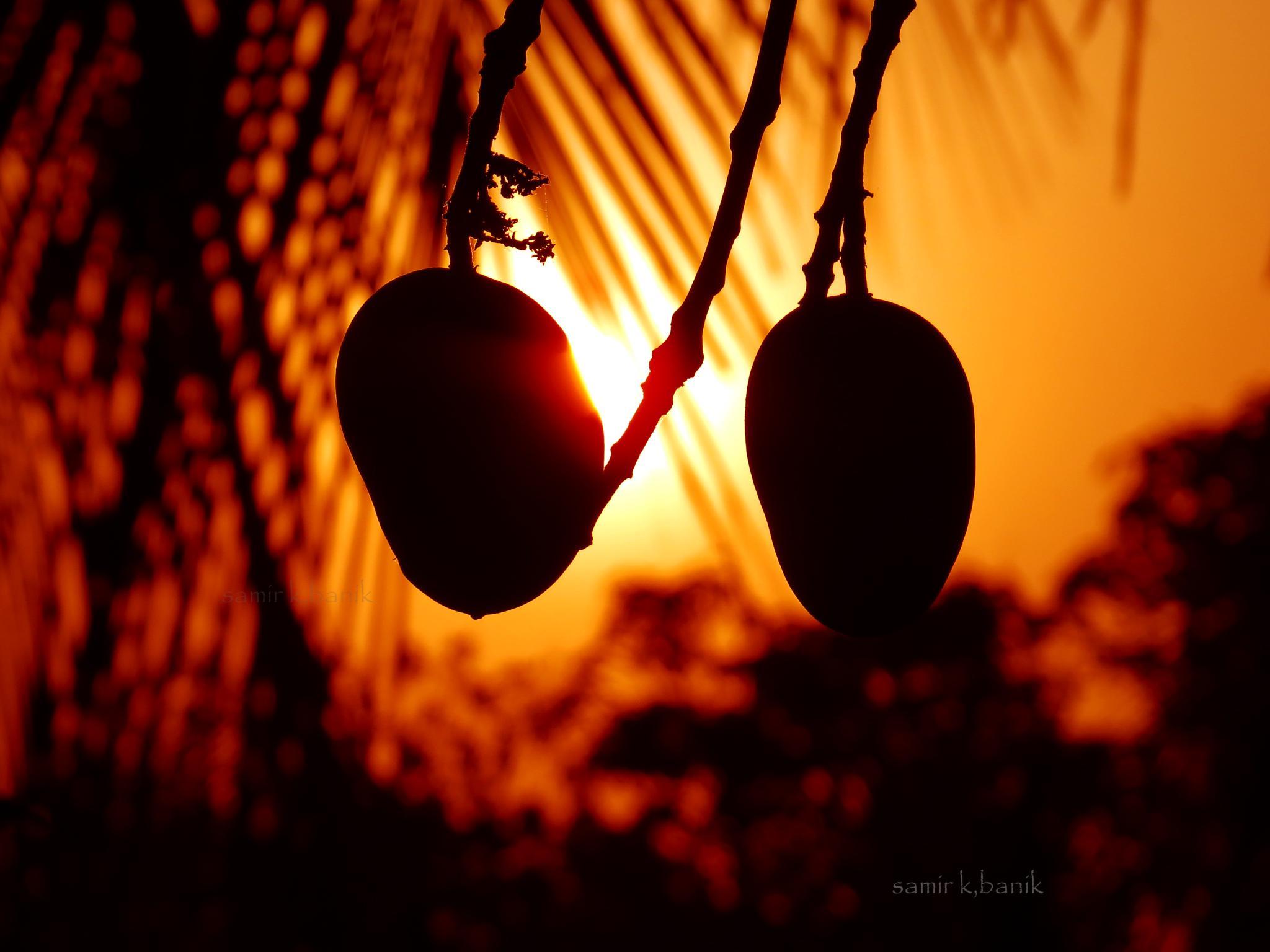 Mango by samir.banik