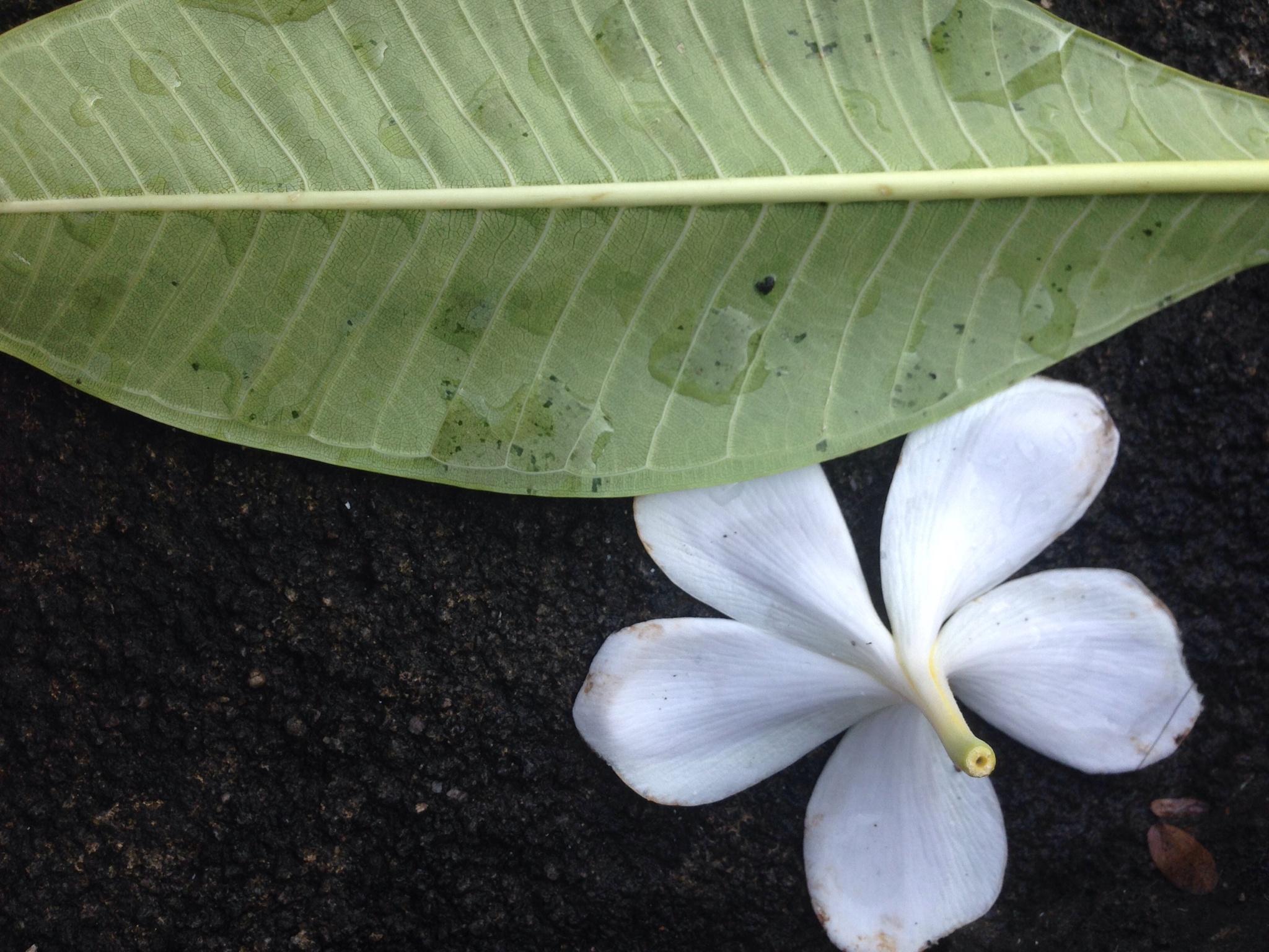 Flower and Leaf by jimbo.velasquez.1