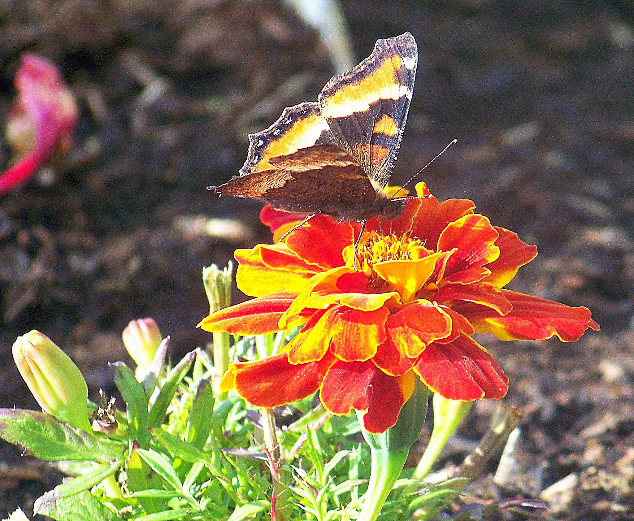 Garden Visit by jone suleski