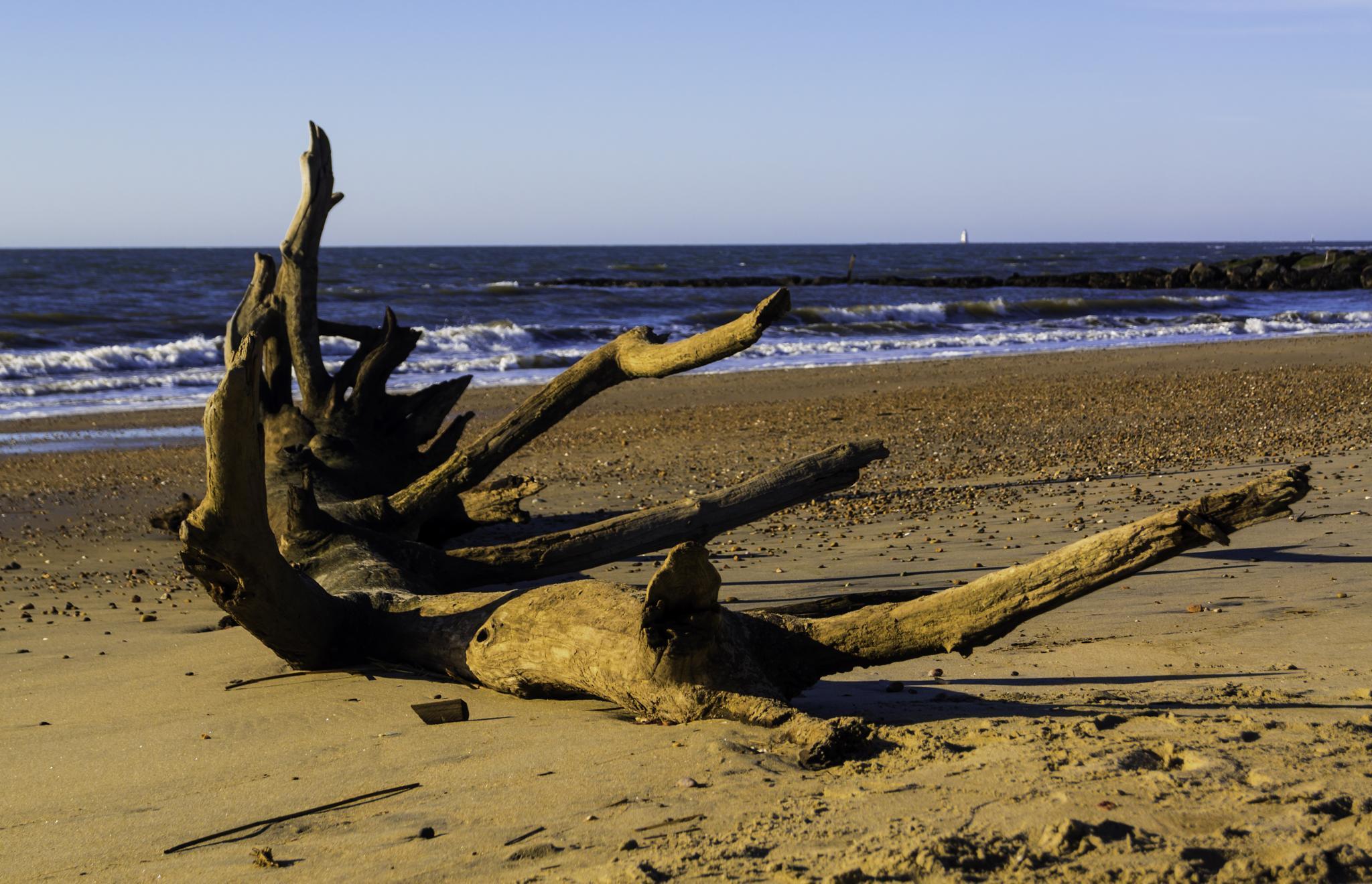 On The Beach v2 by JoeGeraci