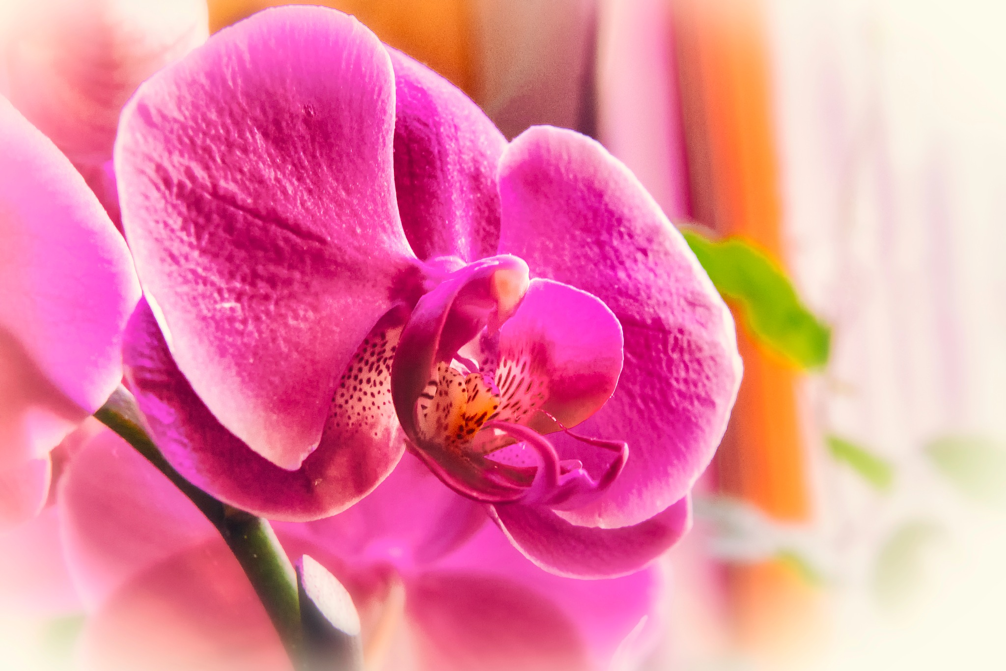 Diffused Orchid by JoeGeraci