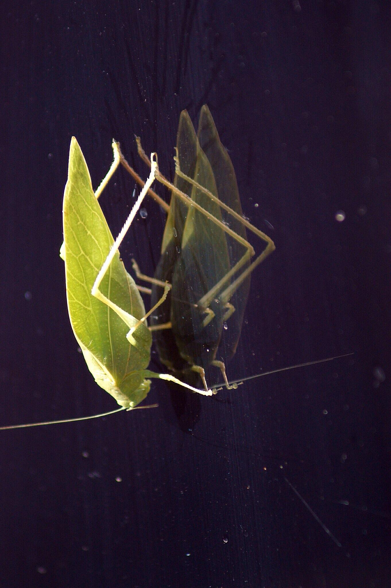 Leafhopper On Glass by Stefani Madison