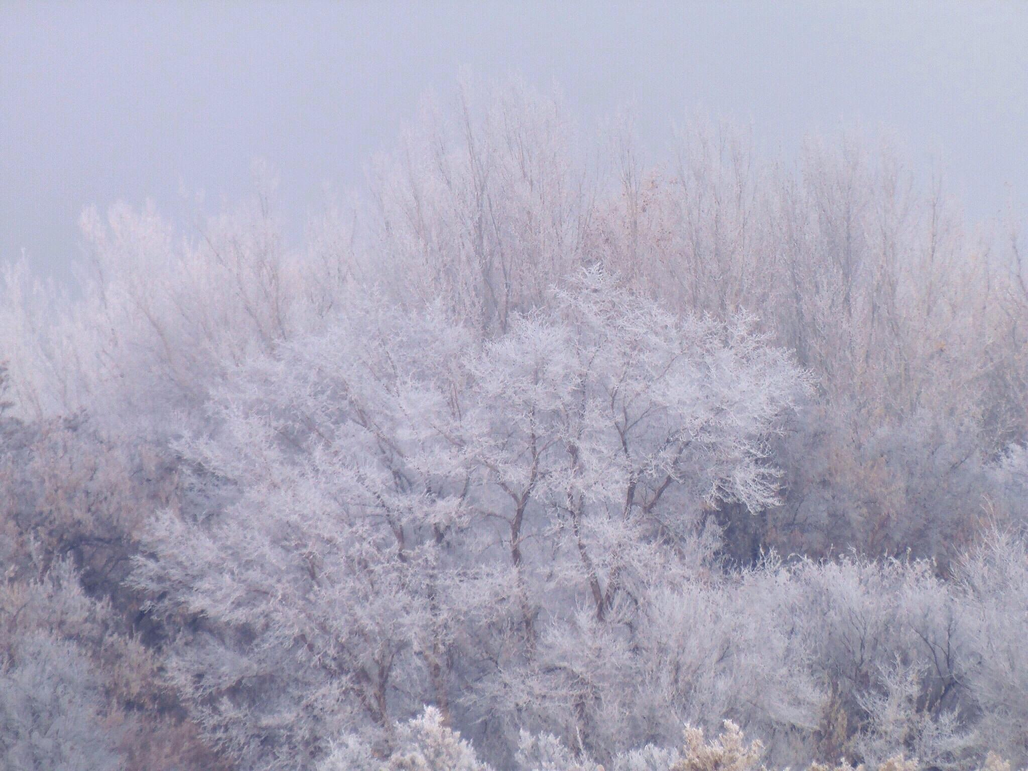 Trees With Hoarfrost In Fog by Stefani Madison