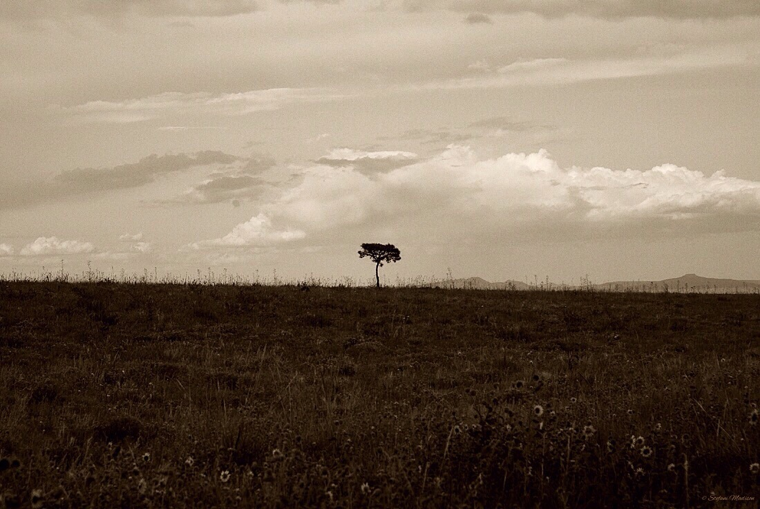 A Kindred Soul by Stefani Madison