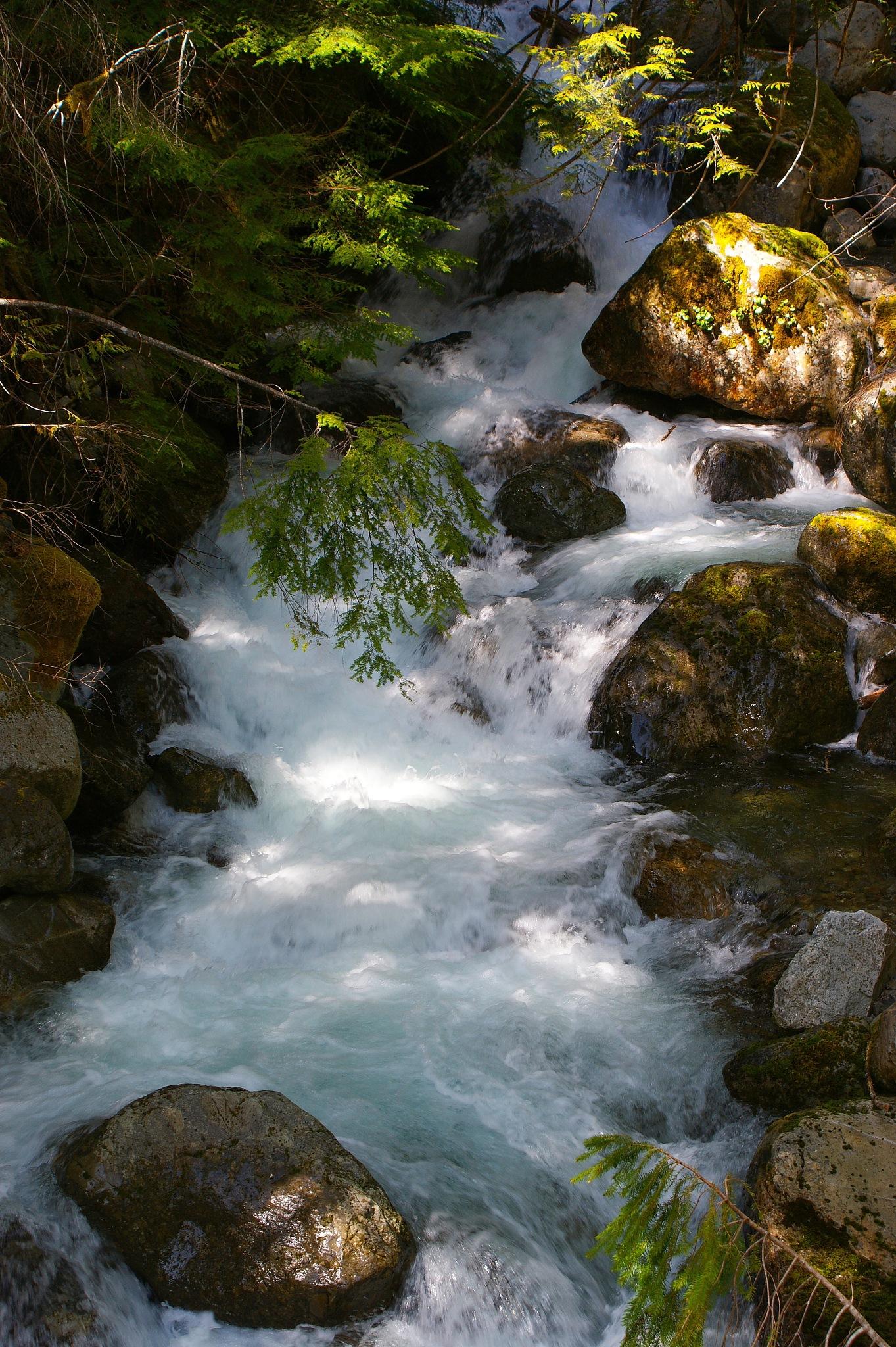 Mountain Stream by Stefani Madison