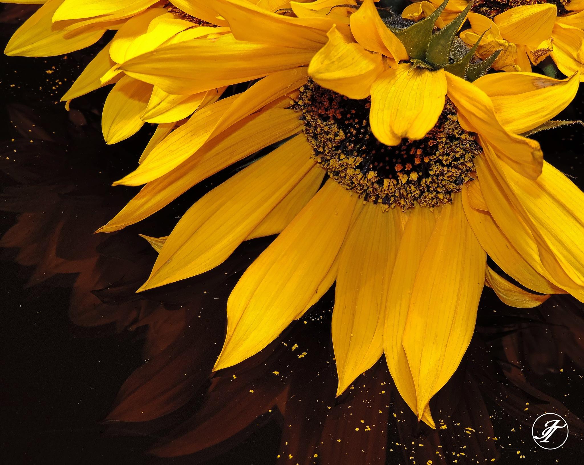 Sunflower... by Jasmin