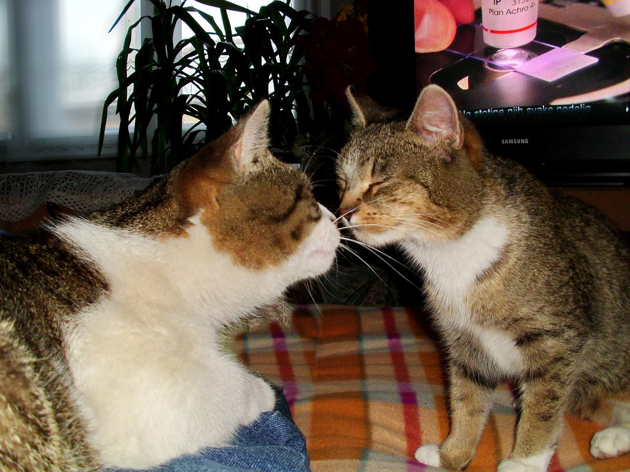 Happy International Cat Day ! by marija.sudarevic