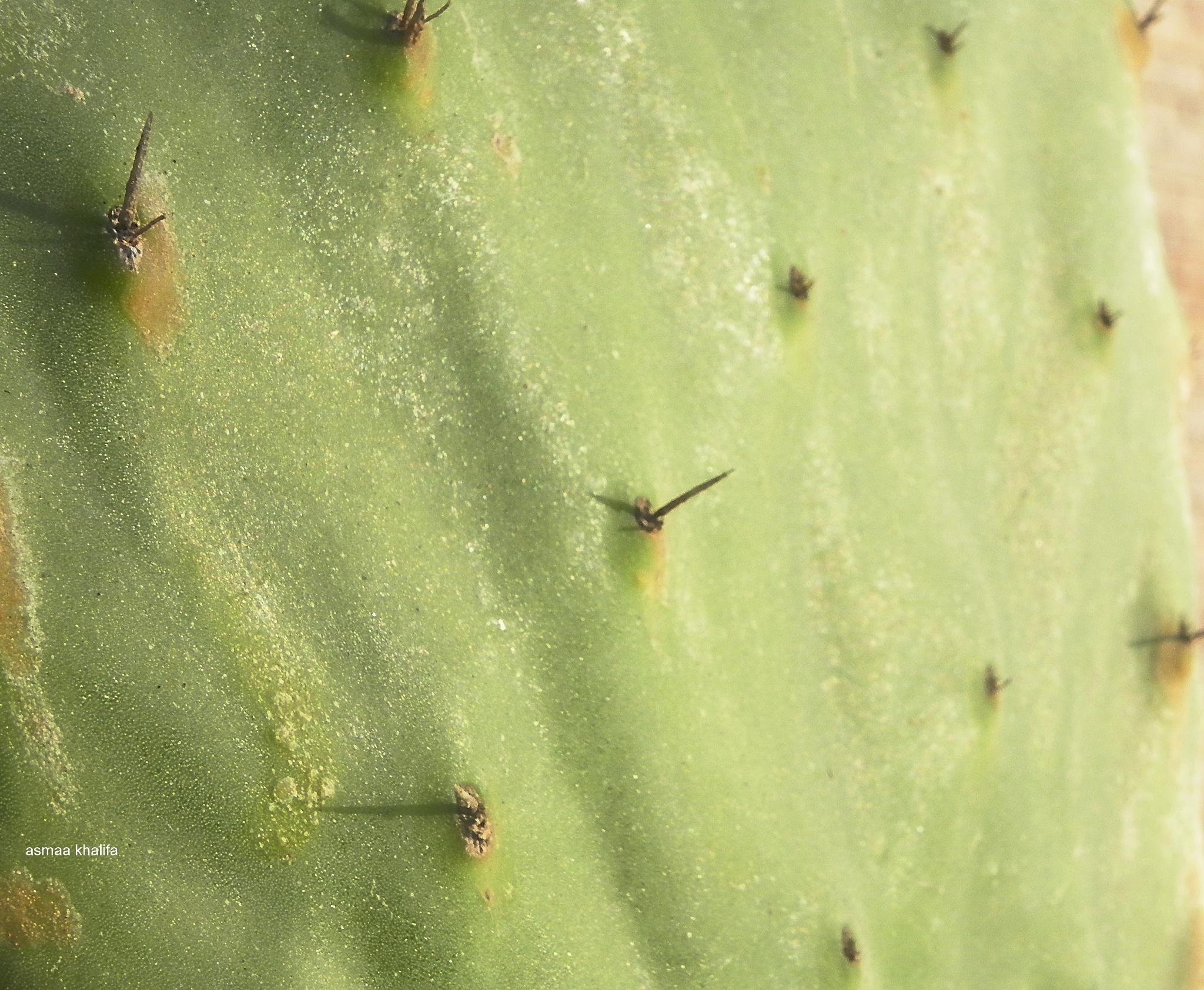 Photo in Nature #cactus #nature #plant