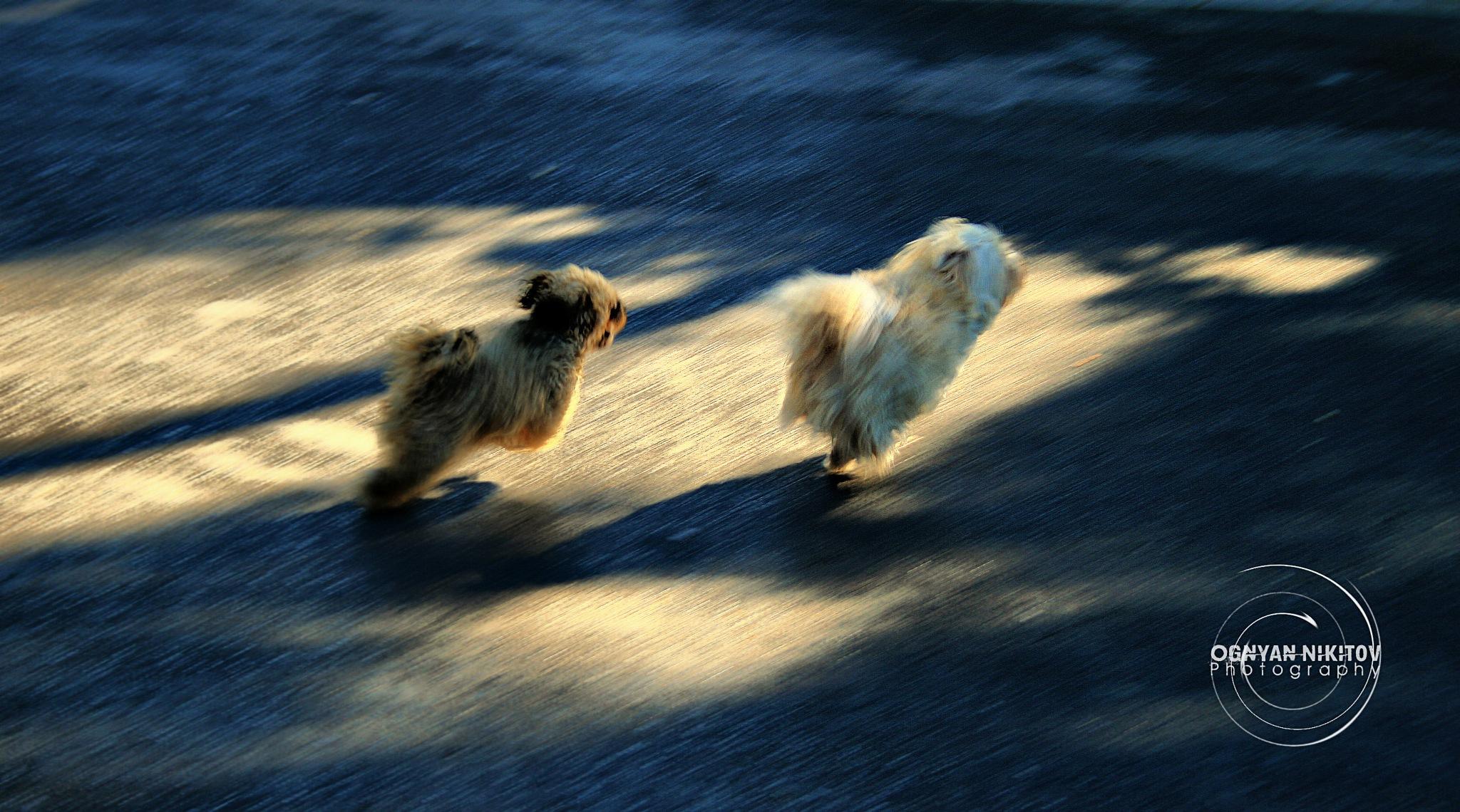 Flying  dogs by yogi101