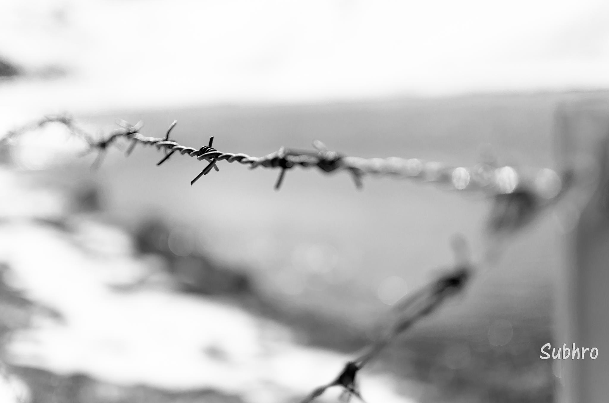 Across the fence by Subhrojit
