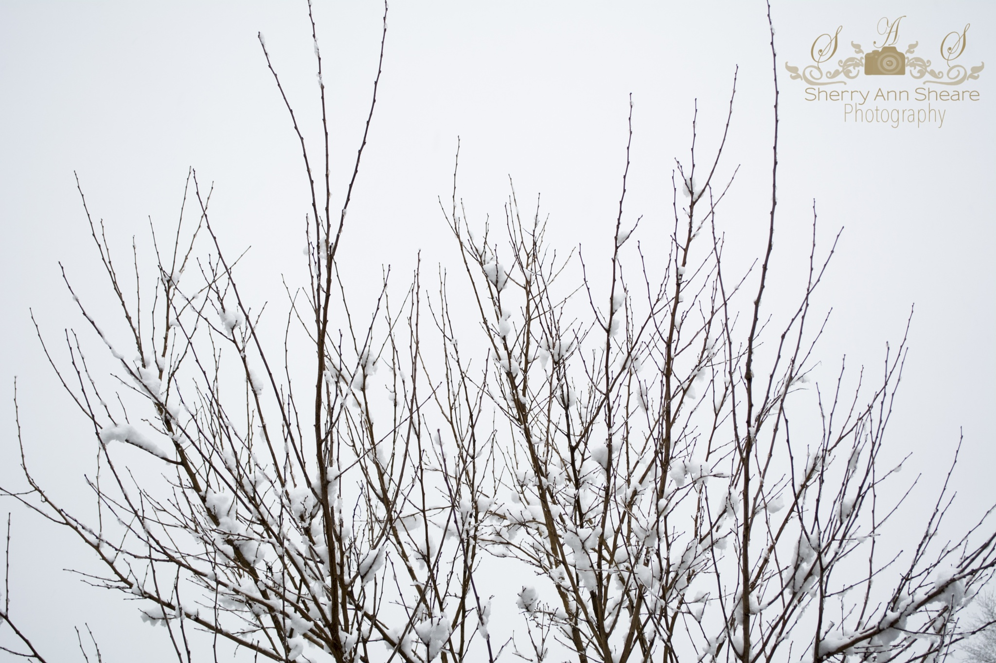 Snow and Branches by Sherry Ann Sheare