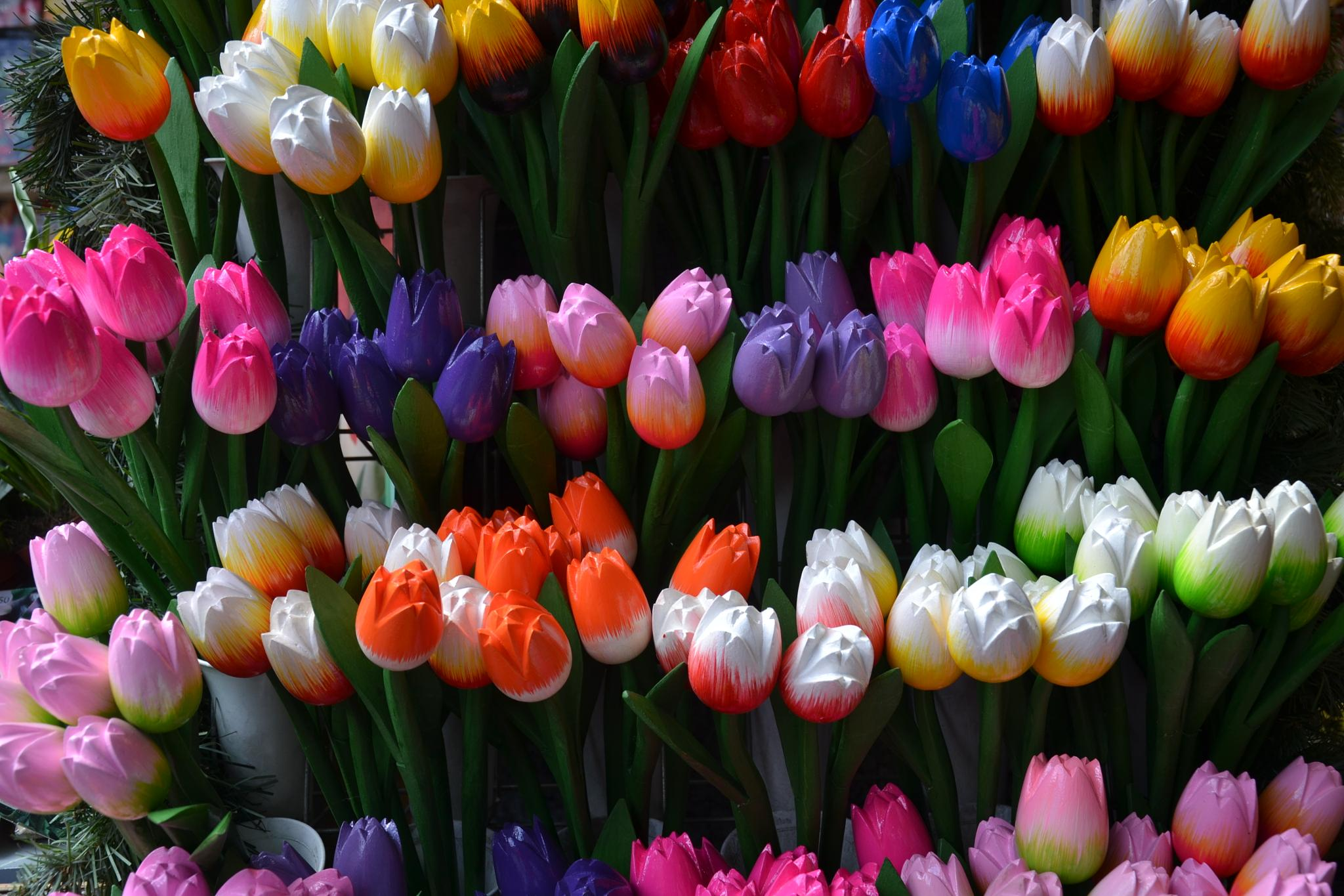 Tulipanes by xemariagil