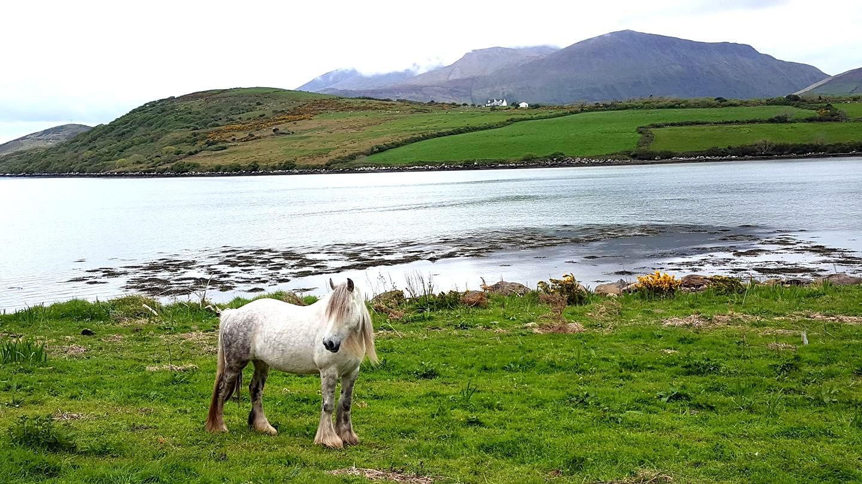 Friendly horse on the Dingle Peninsula by Terry Ballard