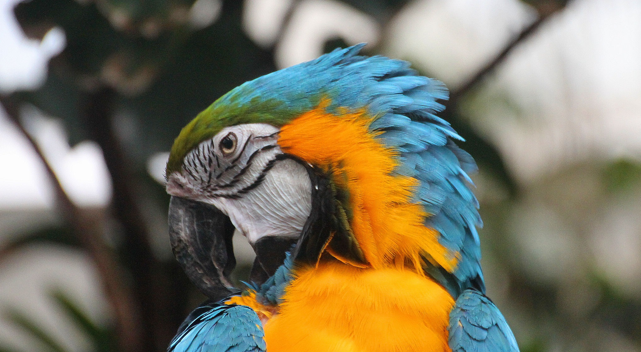 Macaw at the Central Park Zoo by Terry Ballard