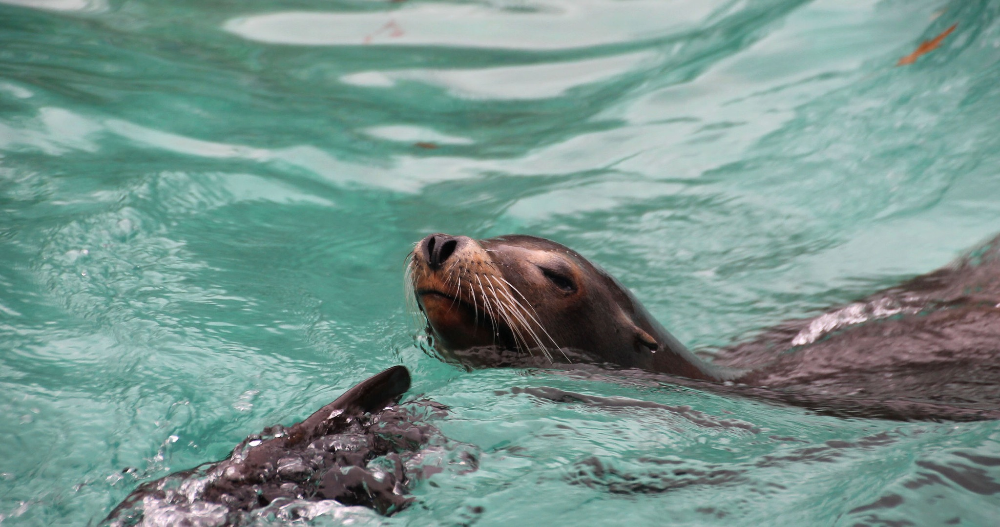 Photo in Animal #seals #waves #new york city