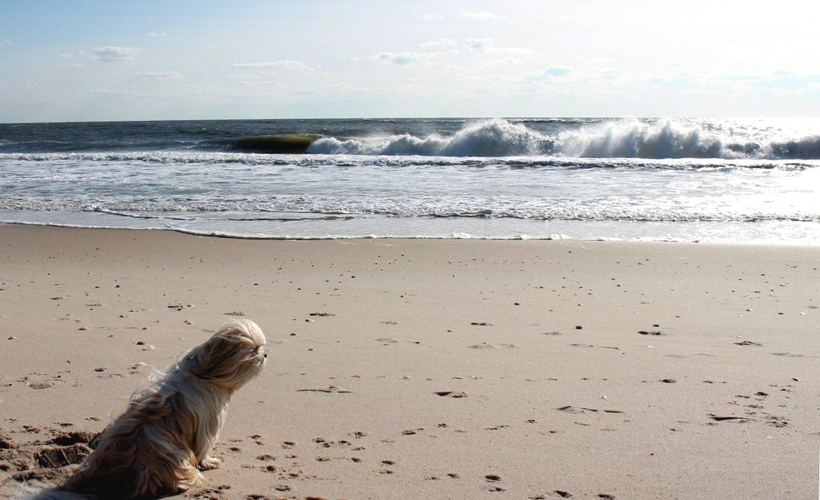 Yuji contemplating the Atlantic Ocean by Terry Ballard