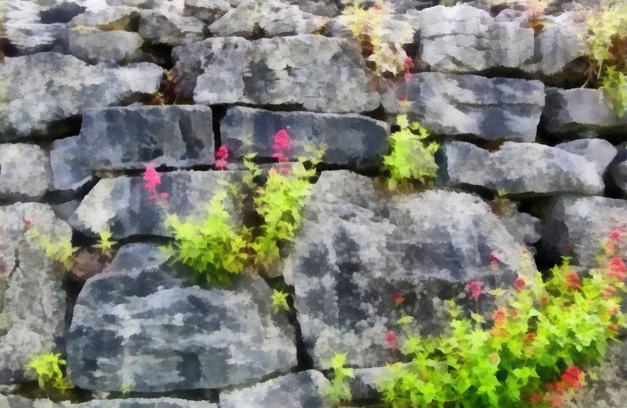 Stone wall in County Clare, Ireland by Terry Ballard