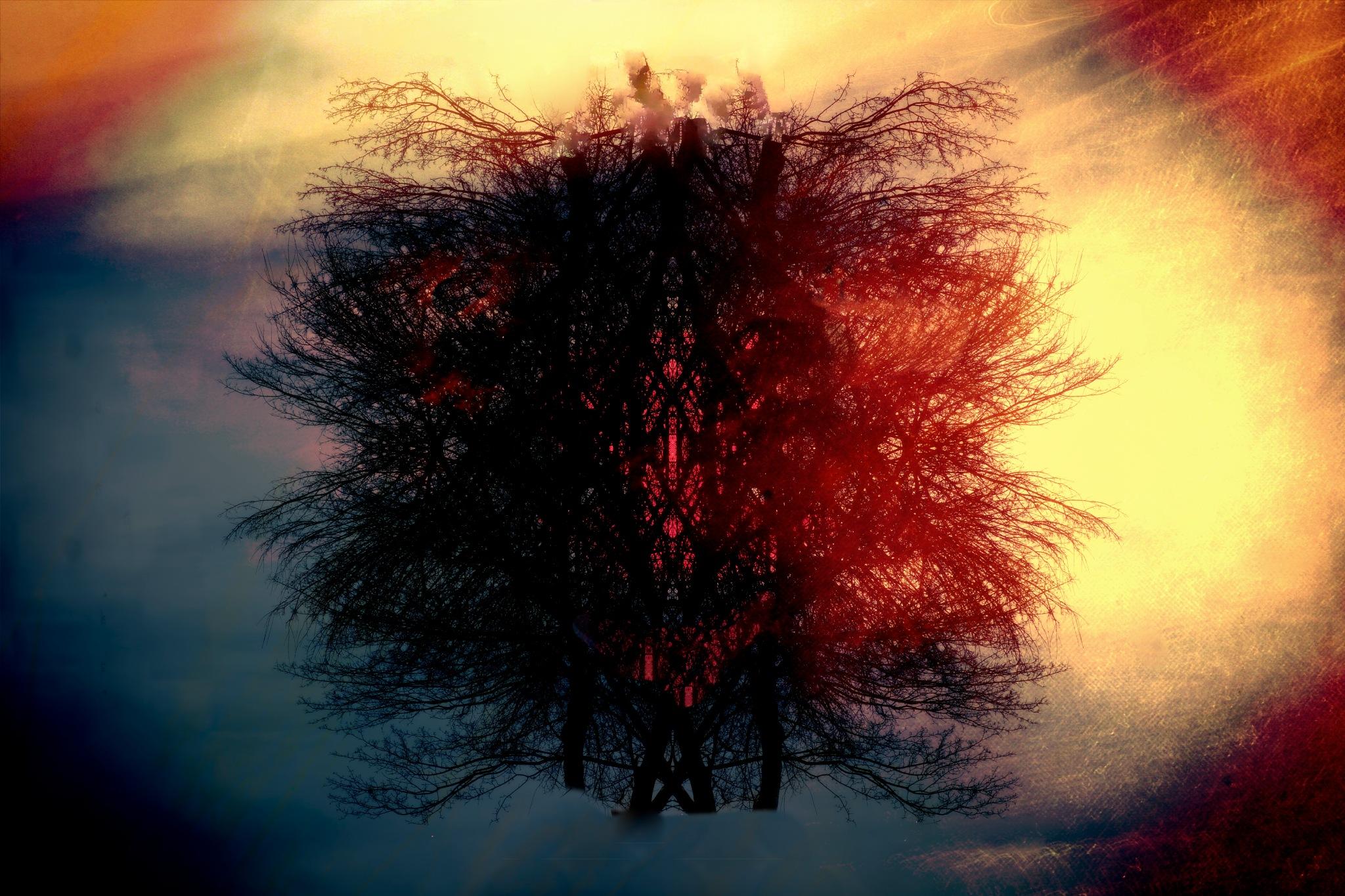 The Magic Tree by tonyjoe.gardner