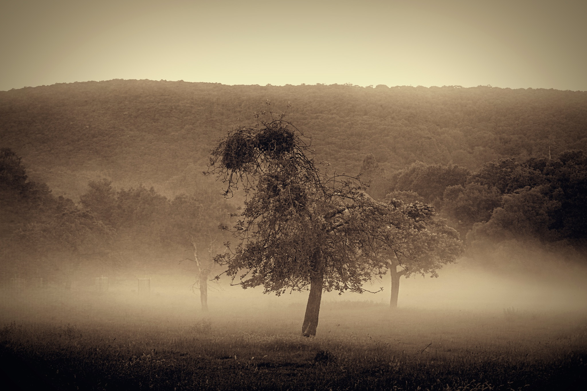 Foggy Morning by tonyjoe.gardner