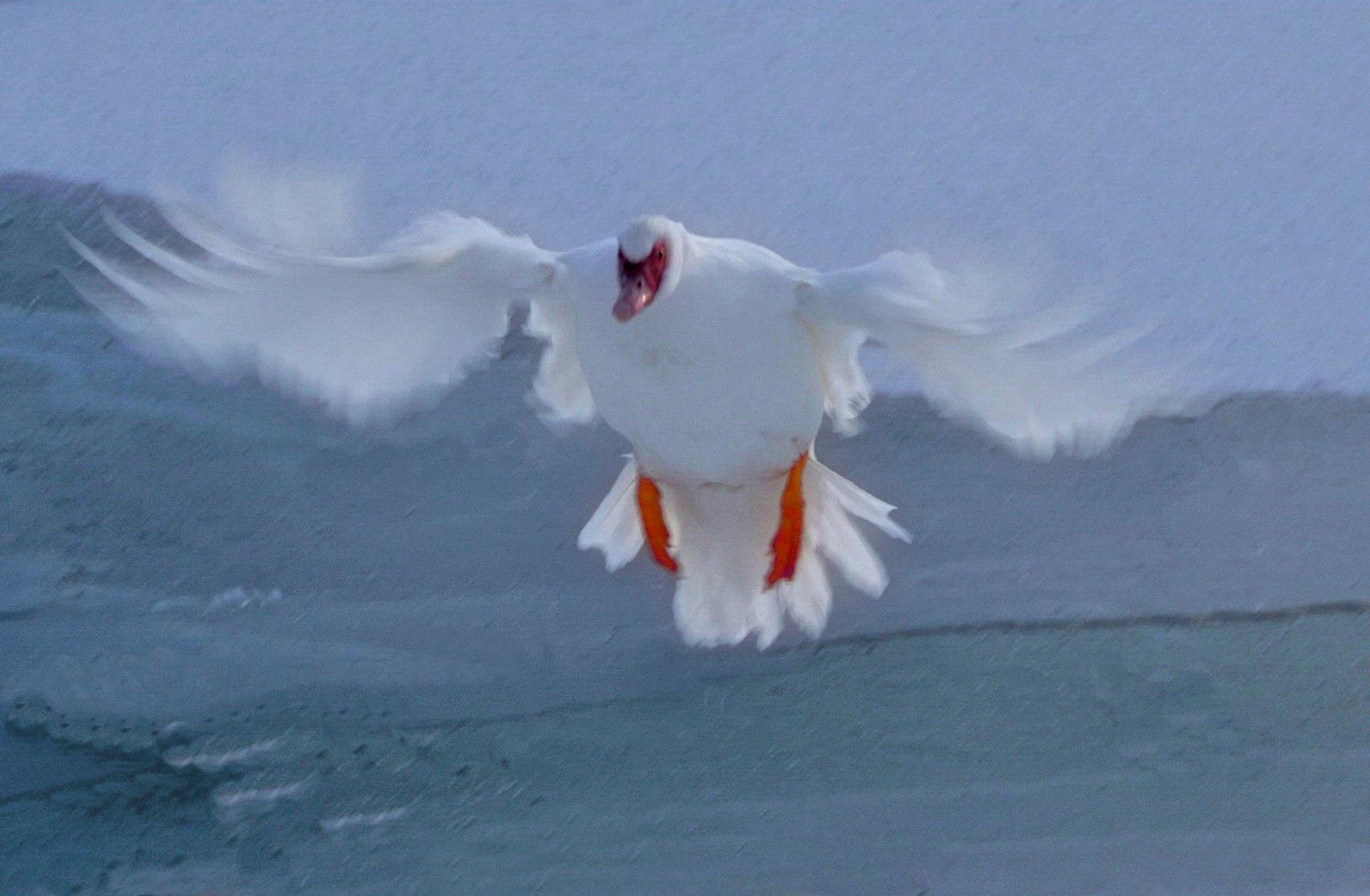 Landing On Ice by tonyjoe.gardner
