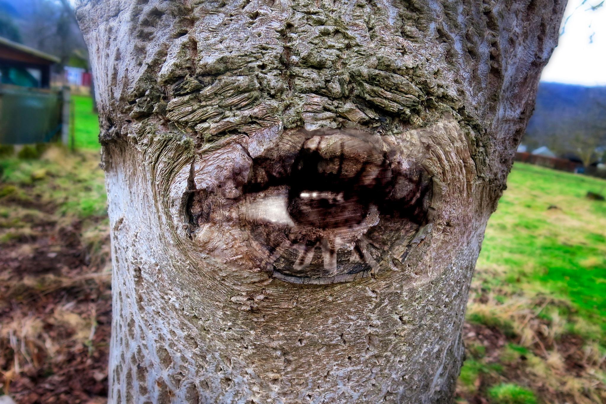 The Eye by tonyjoe.gardner