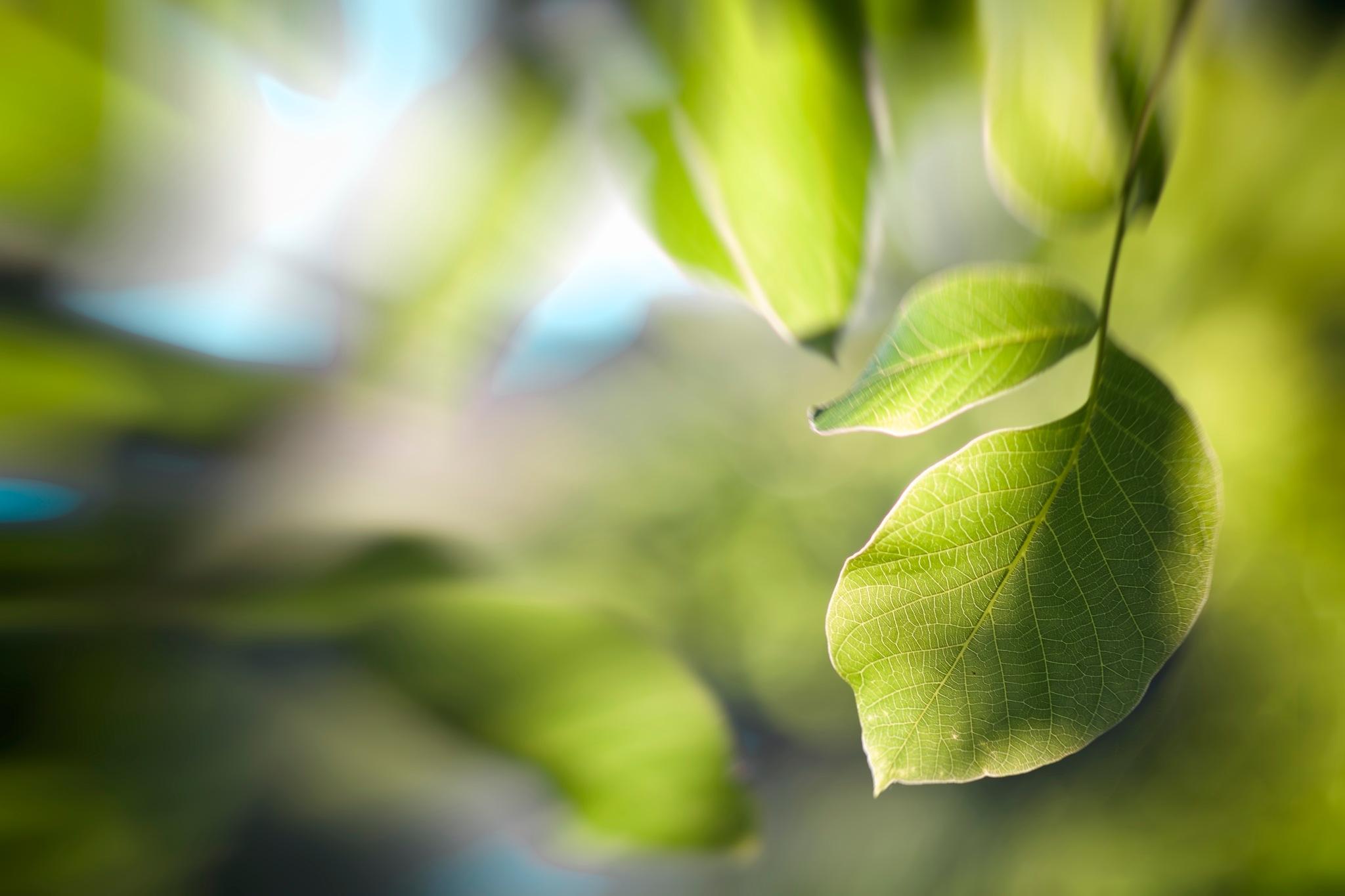 Leaves by tonyjoe.gardner