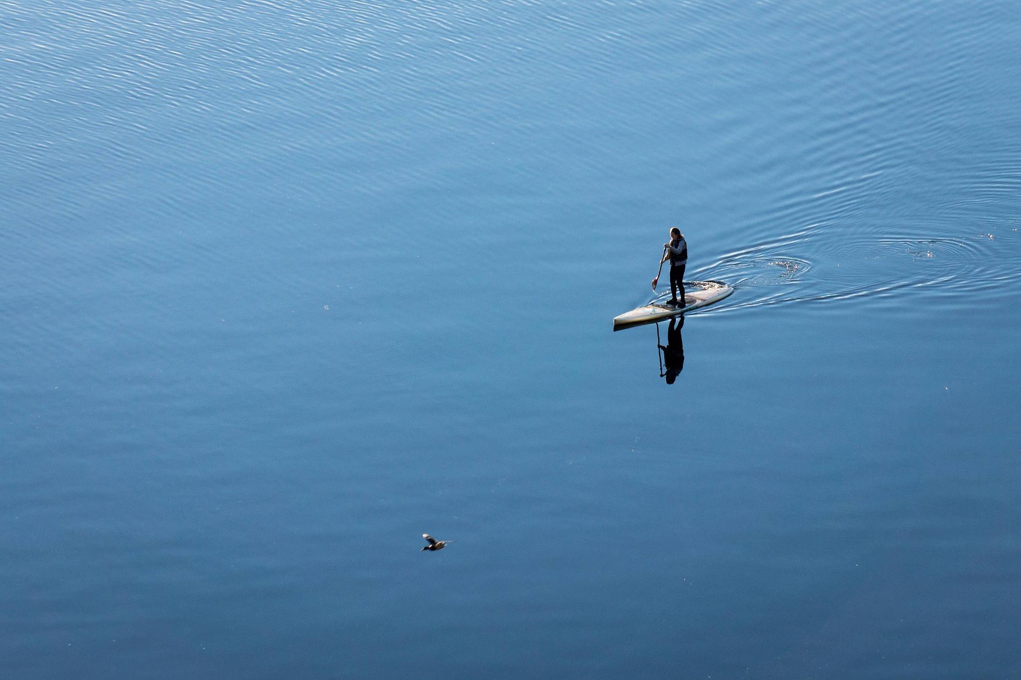 Following the bird by Mauro Valli